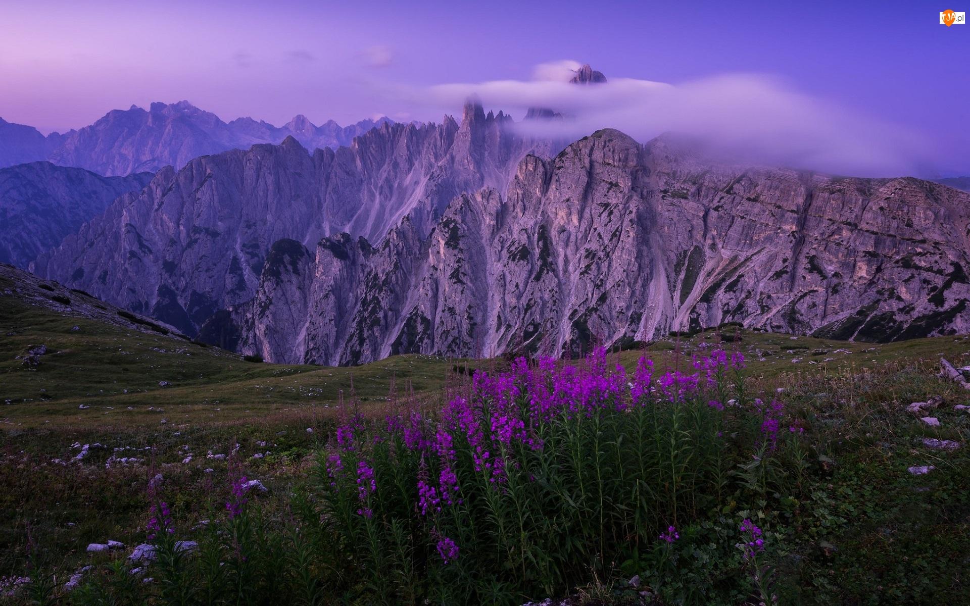 Krwawnica pospolita, Prowincja Belluno, Kwiaty, Mgła, Fioletowe, Dolomity, Pasmo górskie Cadini di Misurina, Włochy, Góry Alpy