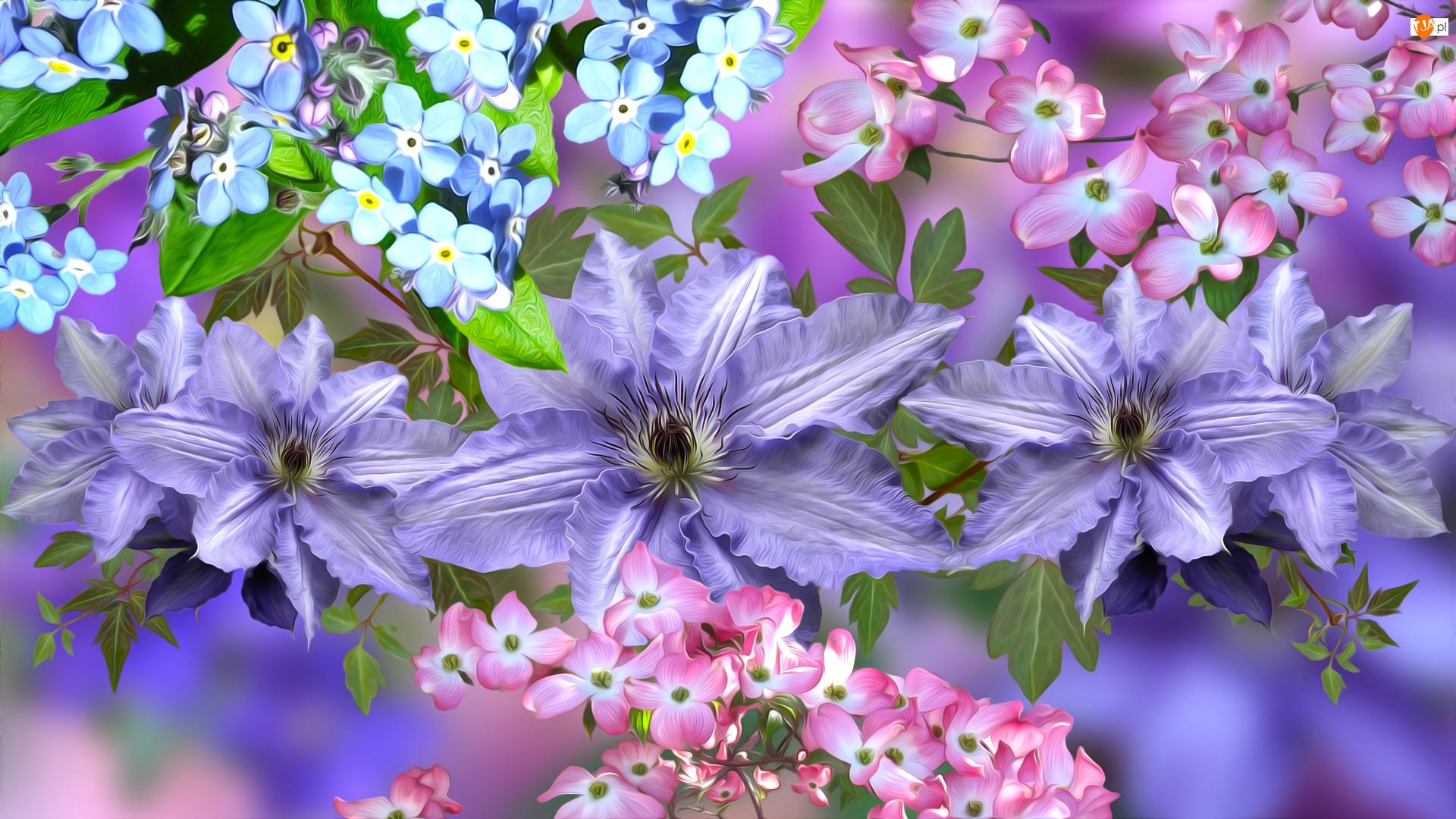 Dereń, Kwiaty, Powojniki, Niezapominajki
