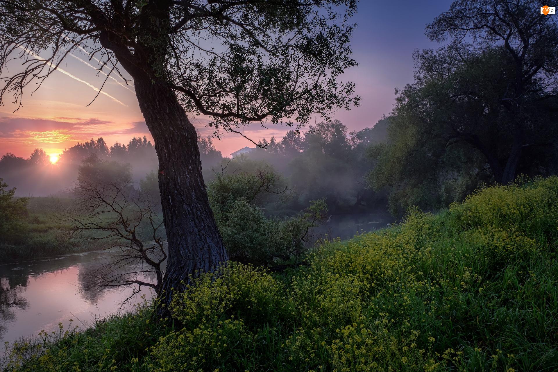 Drzewa, Rzeka Istra, Mgła, Rosja, Wschód słońca, Obwód moskiewski