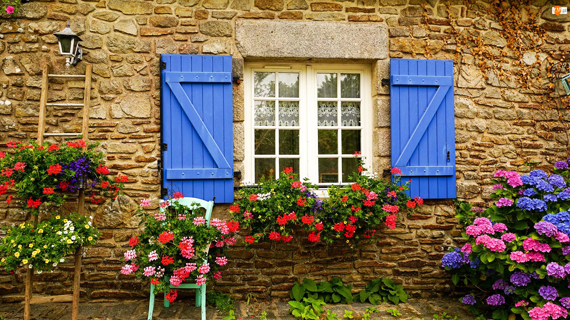 Drabina, Kwiaty, Hortensja, Okiennice, Fasada, Dom, Okno, Ściana, Niebieskie, Pelargonie