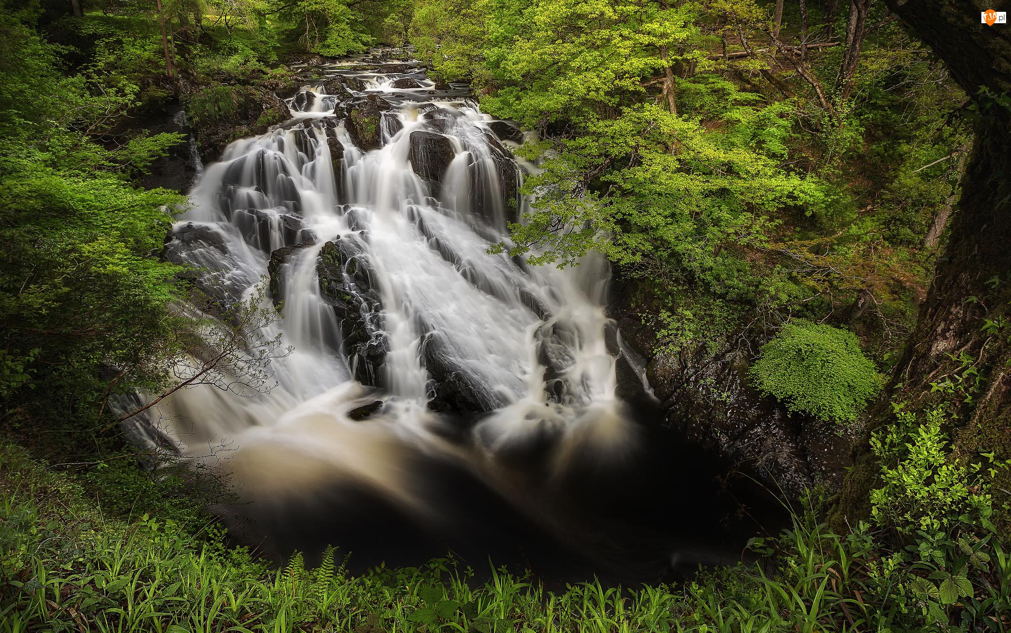 Las, Drzewa, Wielka Brytania, Wodospad Swallow Falls, Walia, Park Narodowy Snowdonia, Skały