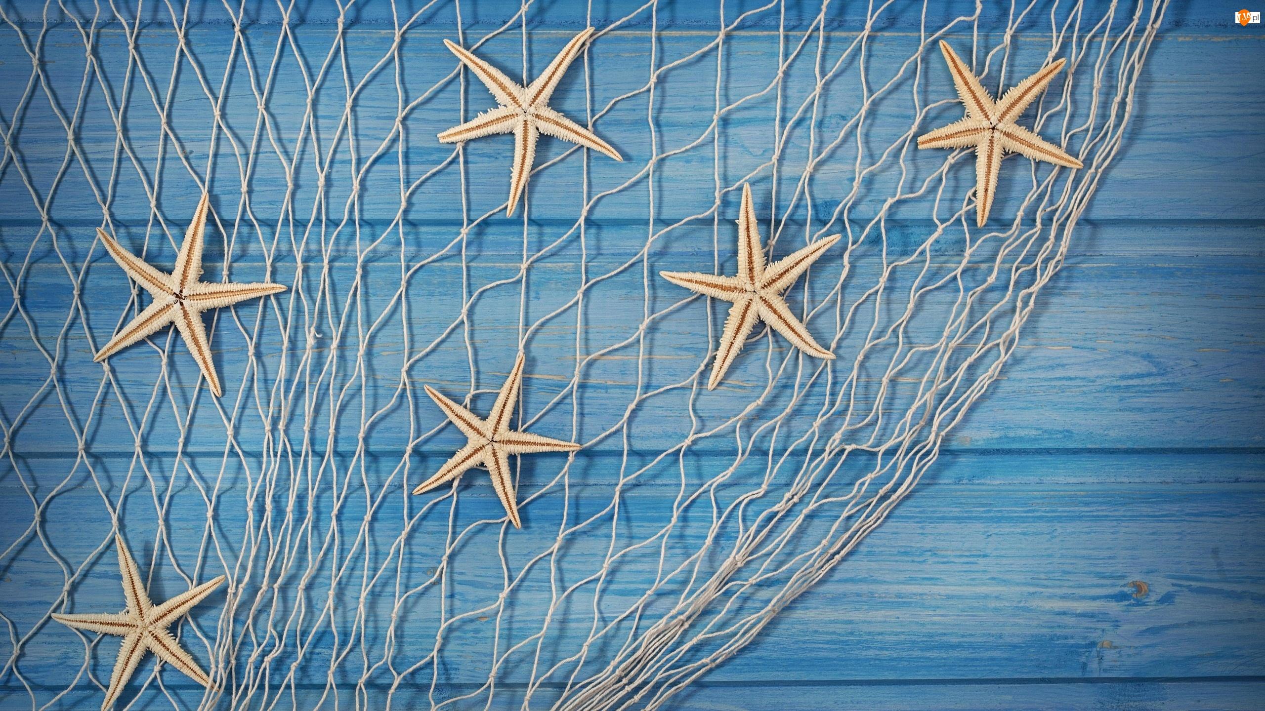 Rozgwiazdy, Dekoracja, Siatka