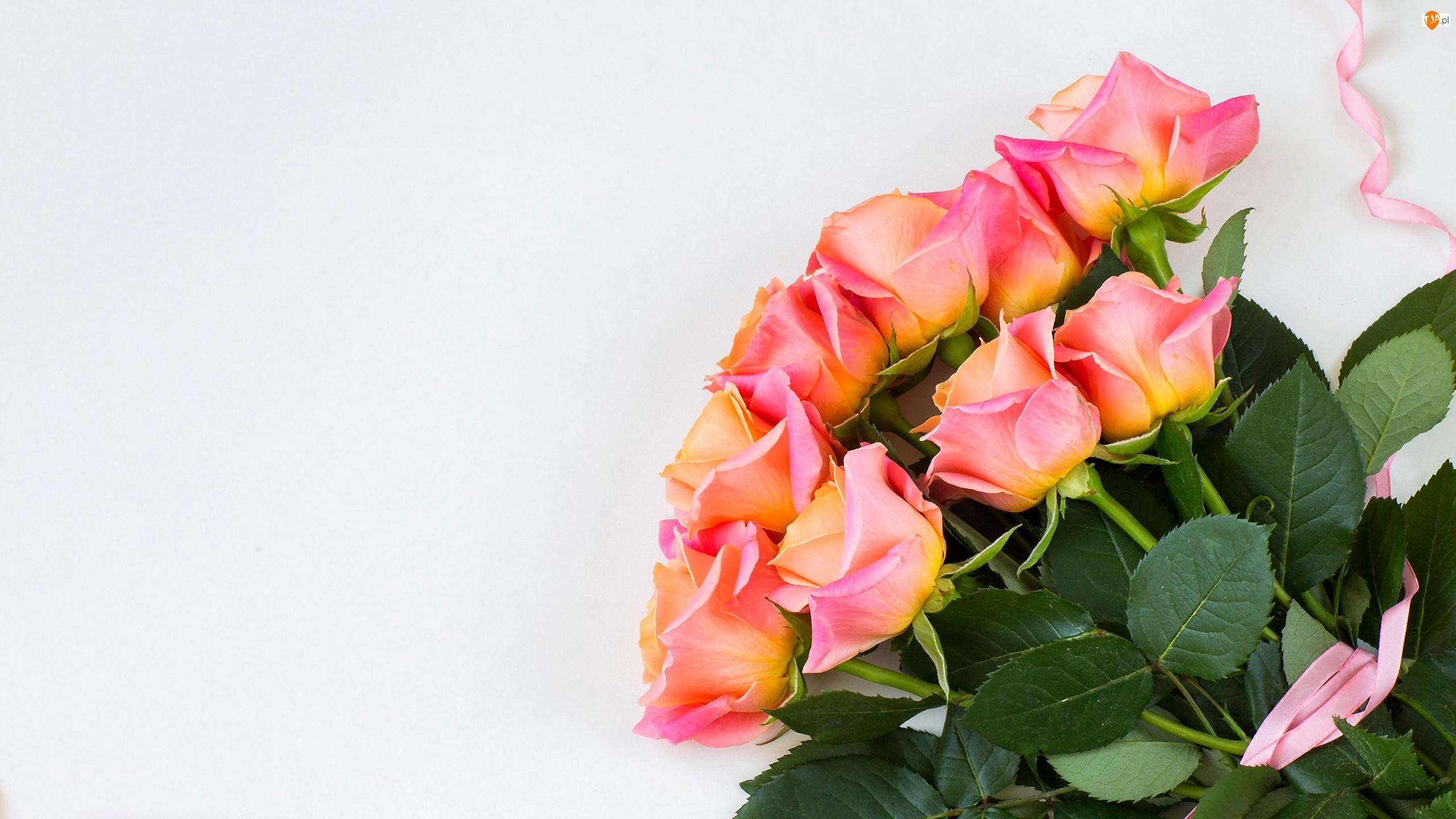 Wstążka, Róże, Bukiet, Różowa