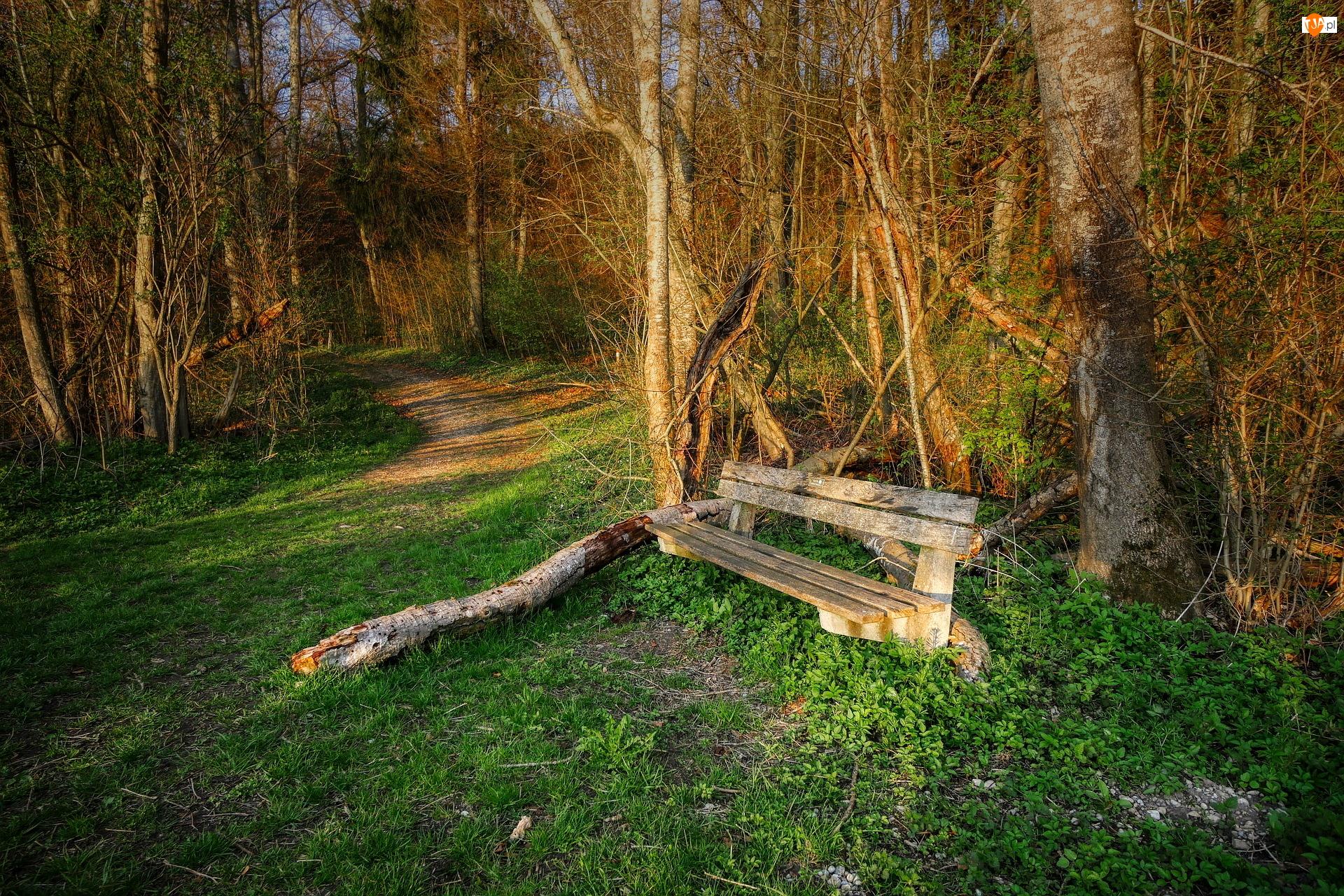 Ścieżka, Ławka, Las, Wiosna, Drzewa