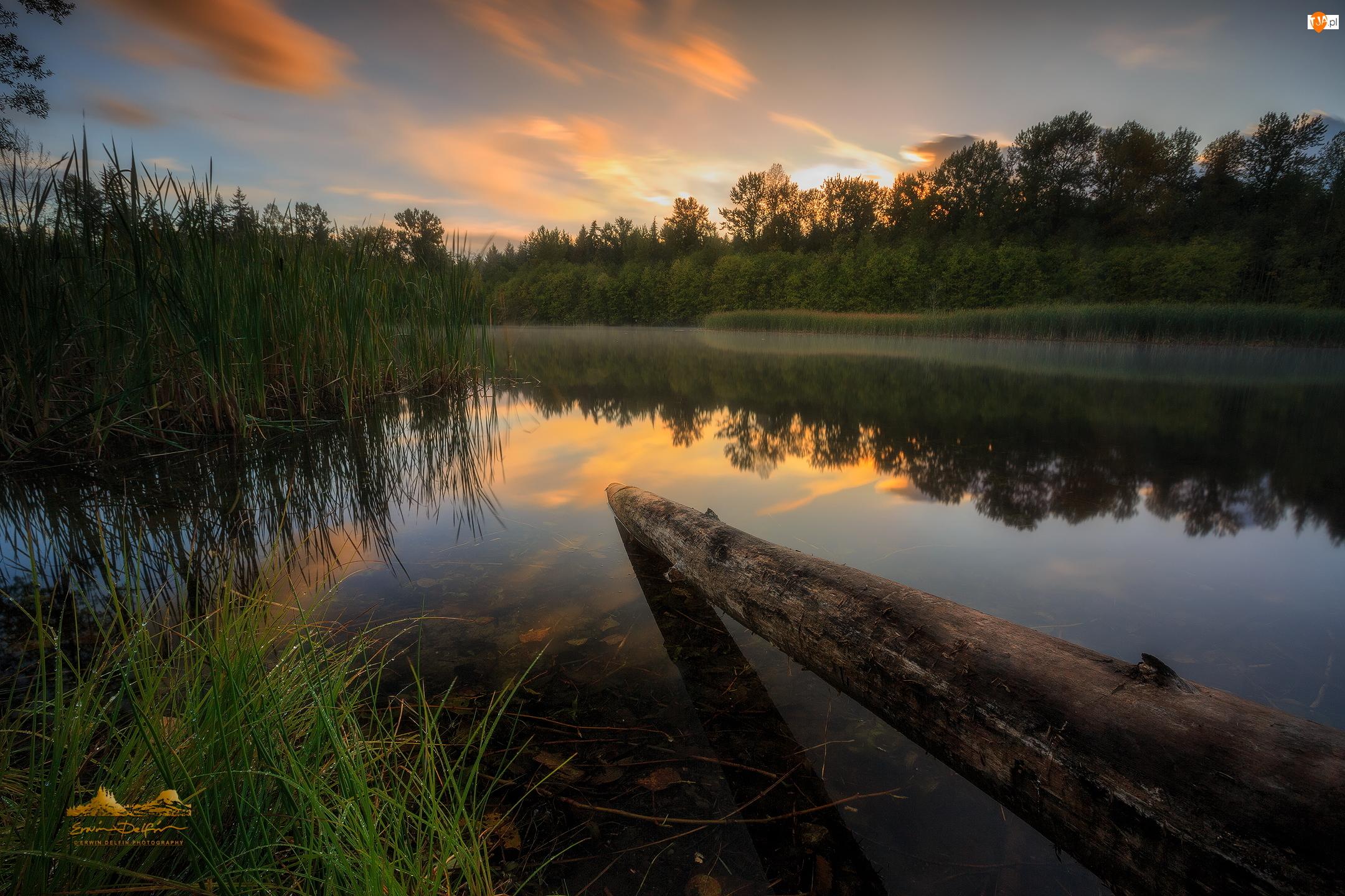 Surrey, Jezioro Green Timbers, Zachód słońca, Kolumbia Brytyjska, Drzewa, Kłoda, Kanada, Trawa