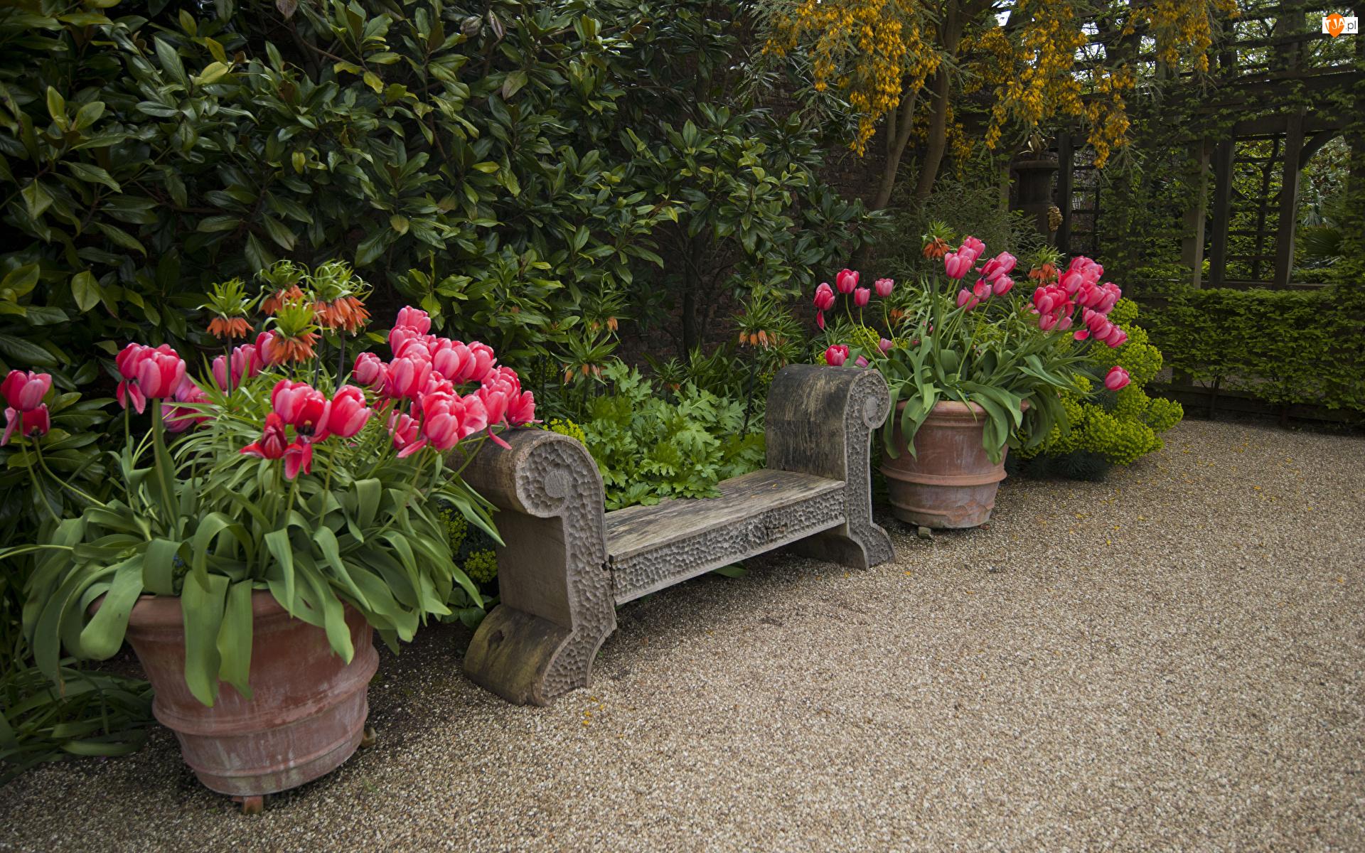 Ławka, Tulipany, Kamienna, Ogród, Donice