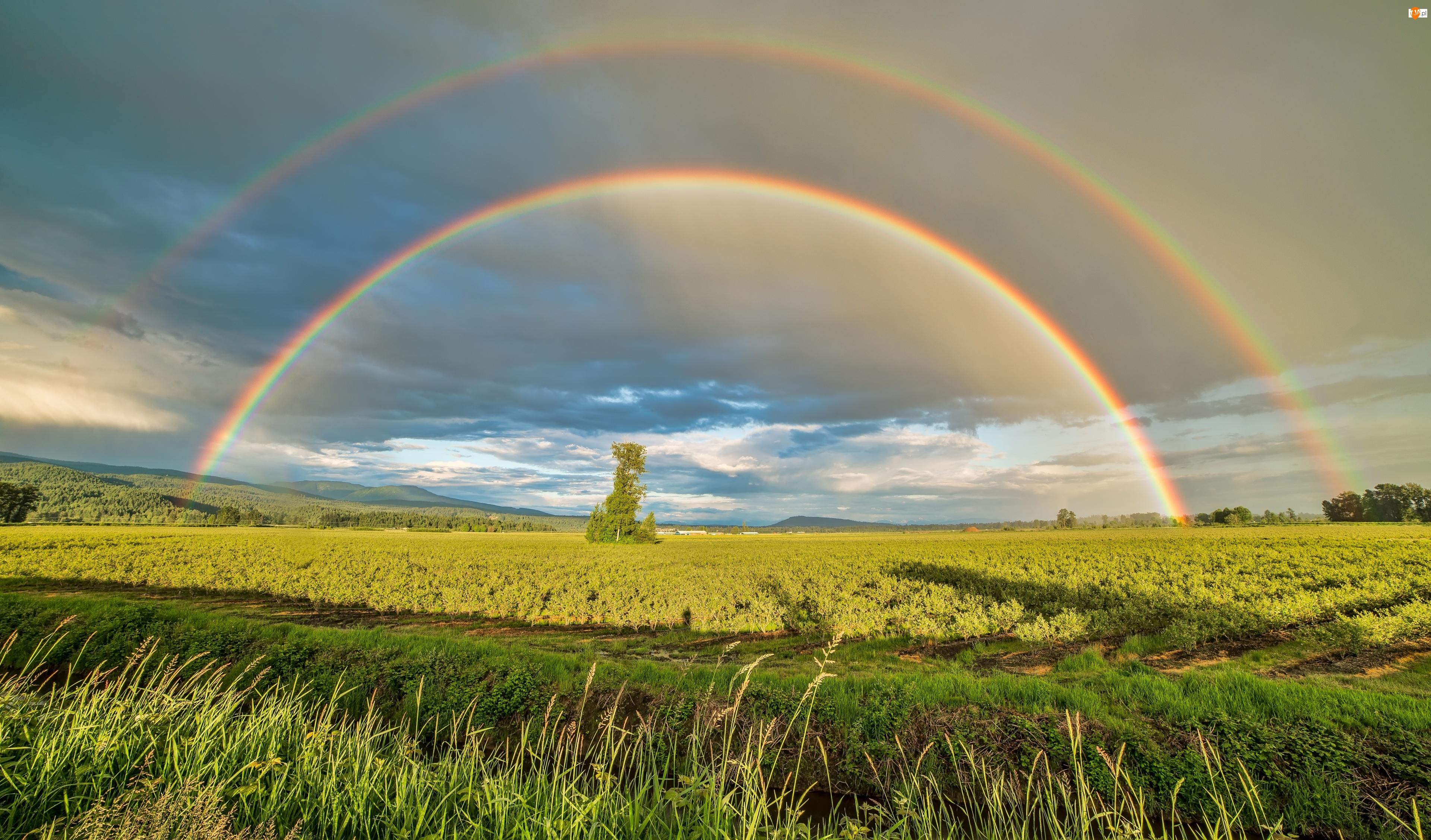 Pitt Meadows, Pola, Niebo, Kolumbia Brytyjska, Zieleń, Lato, Kanada, Tęcza