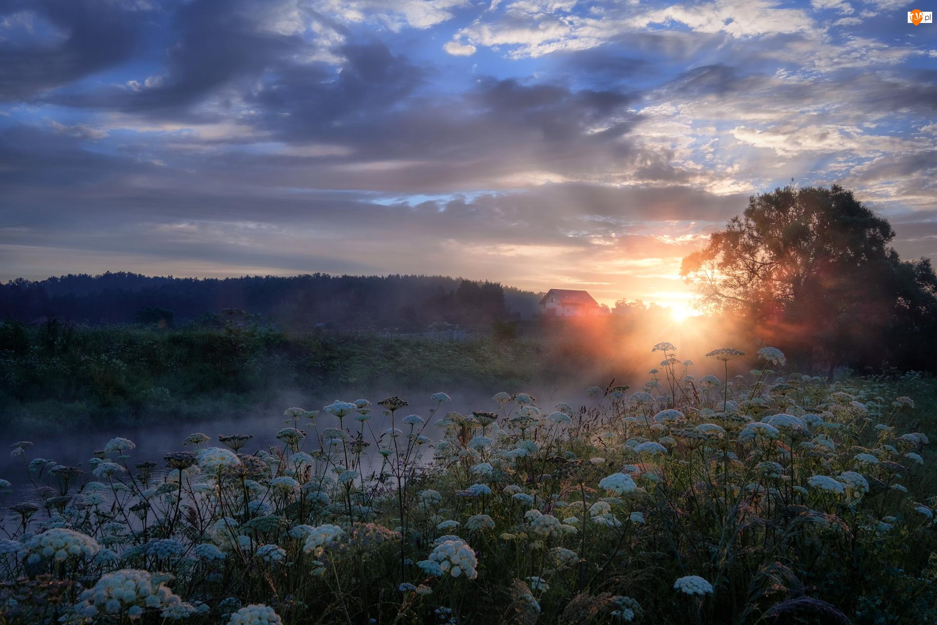 Mgła, Drzewa, Rosja, Rzeka Istra, Obwód moskiewski, Wschód słońca, Roślinność