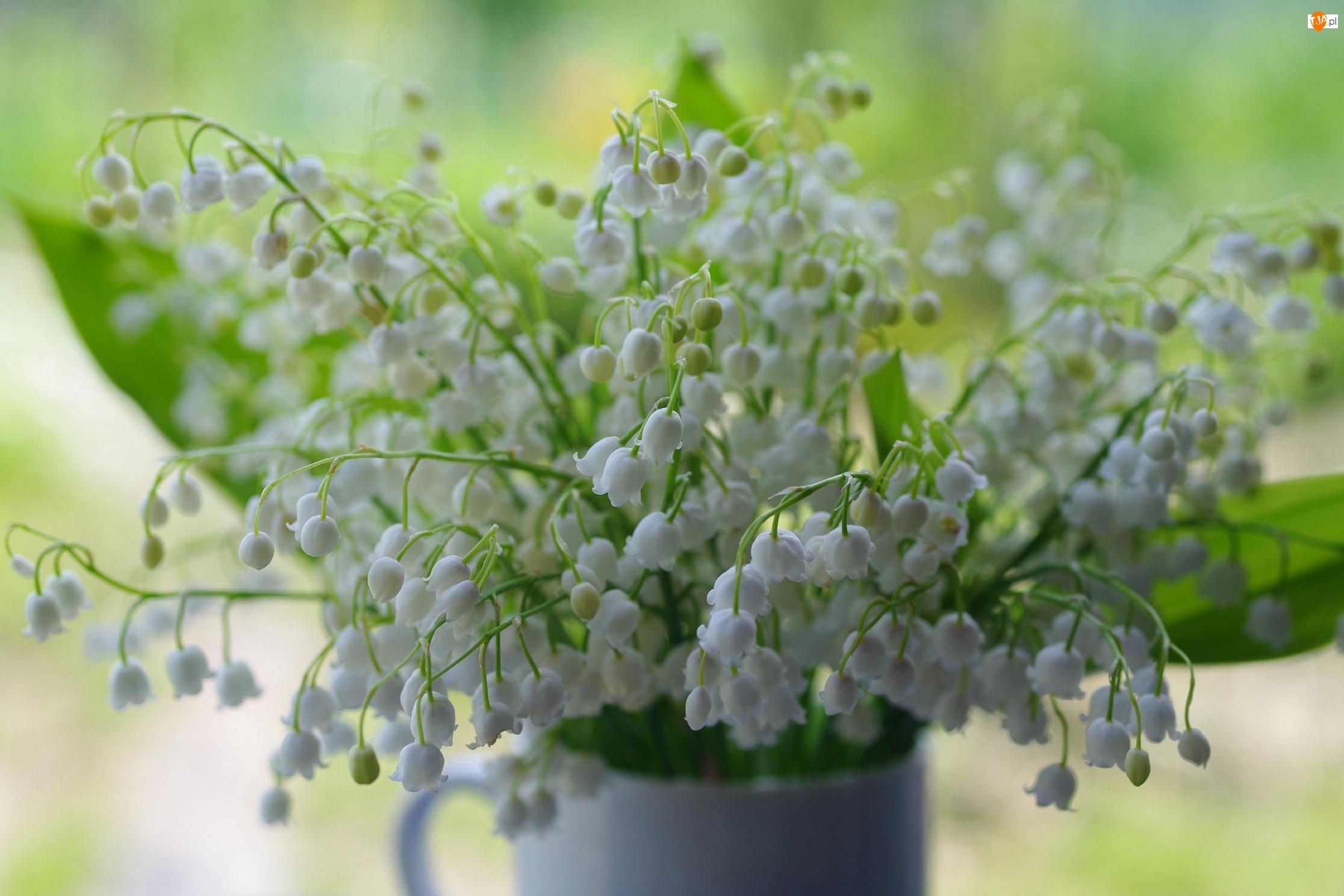 Konwalie, Kwiaty, Bukiet
