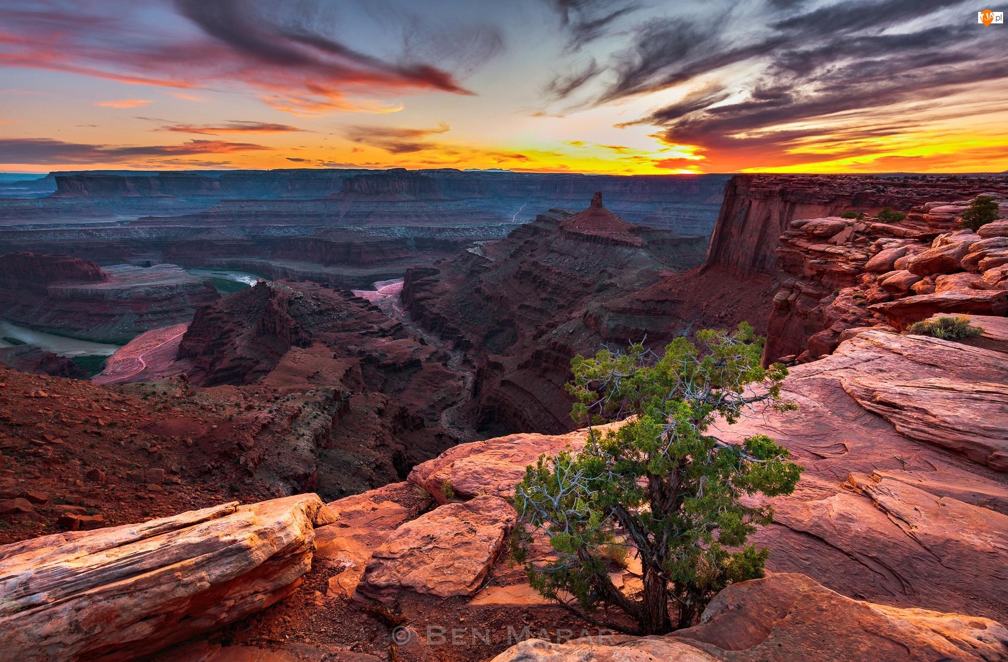 Park stanowy Dead Horse Point, Kanion, Drzewo, Stan Utah, Rzeka Kolorado, Zachód słońca, Stany Zjednoczone, Skały