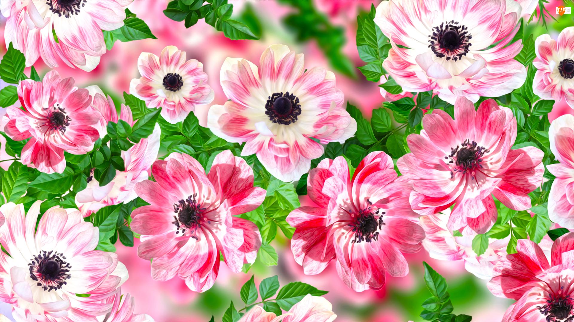 Grafika 2D, Kwiaty, Zawilce