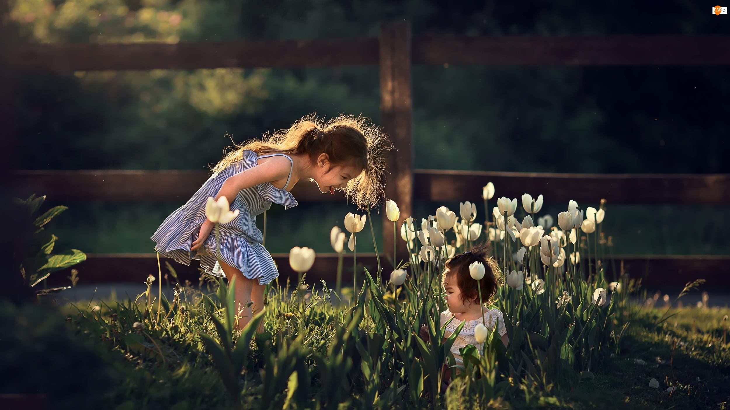 Białe, Płot, Dziewczynki, Dzieci, Tulipany