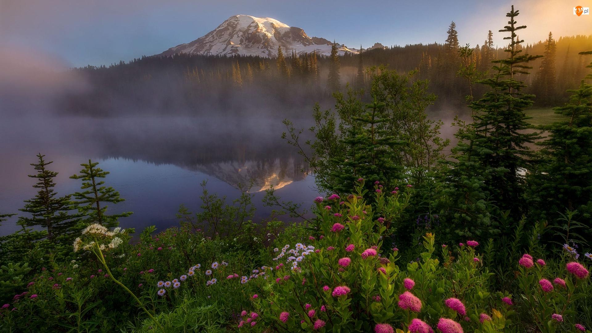 Stany Zjednoczone, Jezioro Reflection Lake, Stan Waszyngton, Drzewa, Kwiaty, Góra, Szczyt Mount Rainier, Park Narodowy Mount Rainier, Mgła