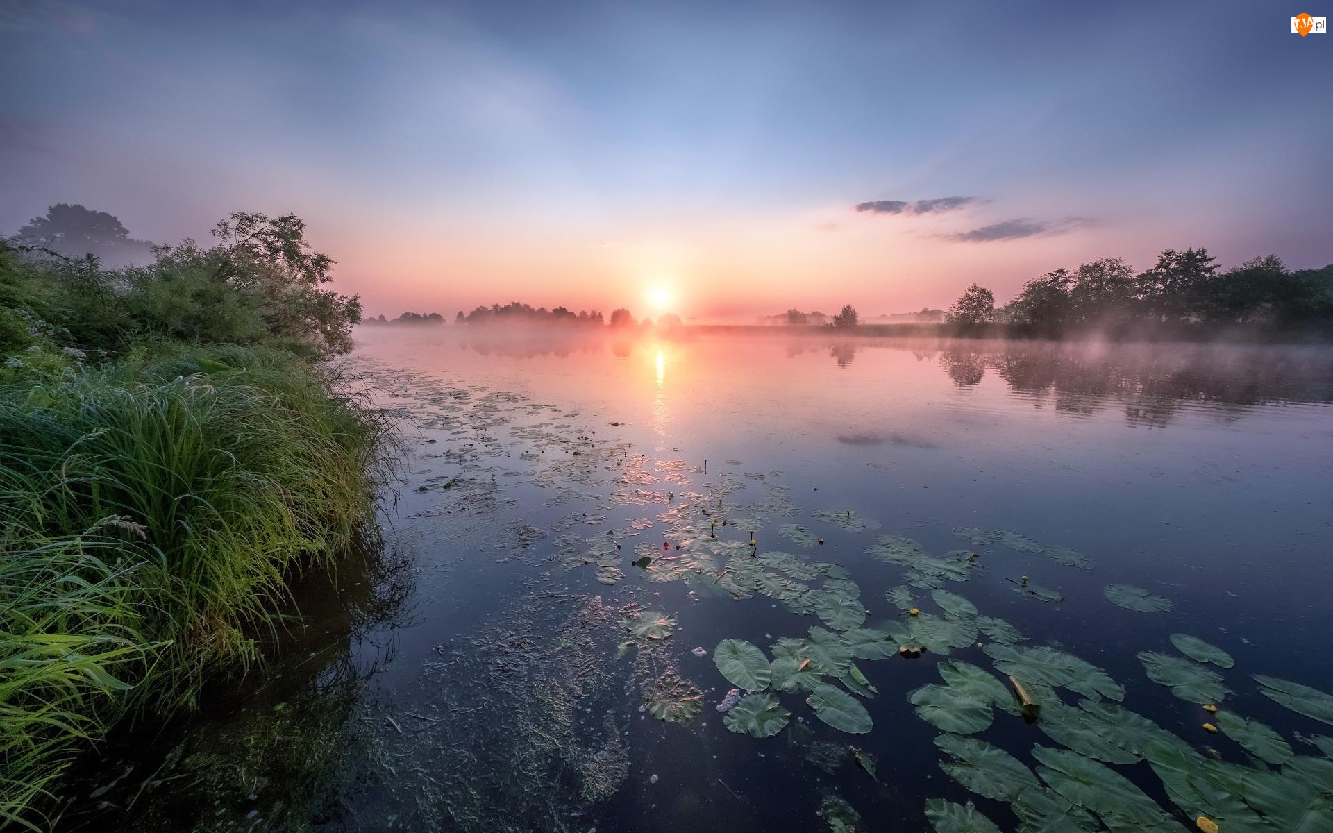 Łotwa, Rzeka Dubna, Łatgalia, Wschód słońca, Mgła, Lilie, Wodne, Trawa, Świt