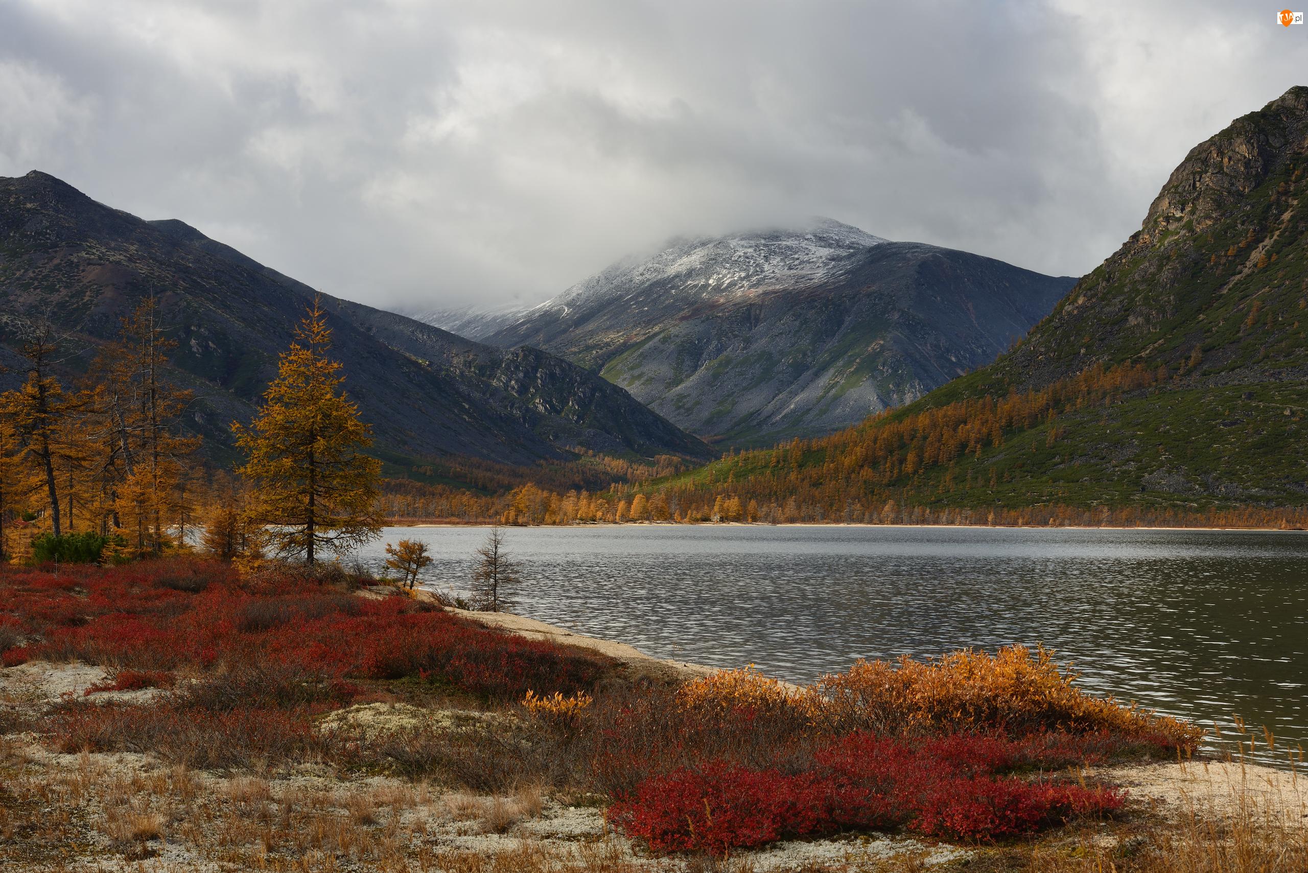 Mgła, Drzewa, Rosja, Jesień, Obwód magadański, Jezioro Jacka Londona, Góry Kołymskie