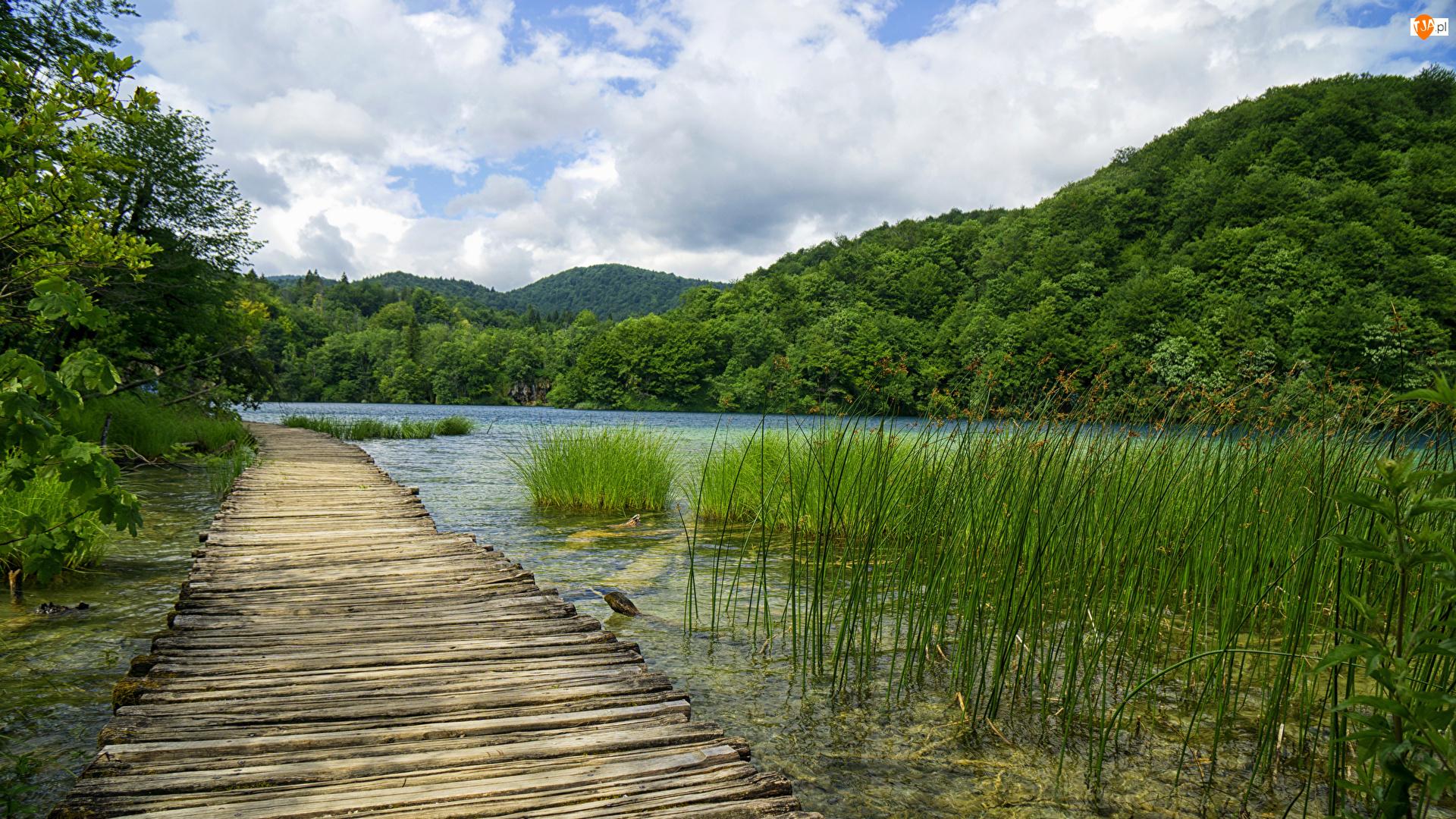 Pomost, Wzgórze, Trawa, Park Narodowy Jezior Plitwickich, Lasy, Jezioro, Chorwacja, Drzewa