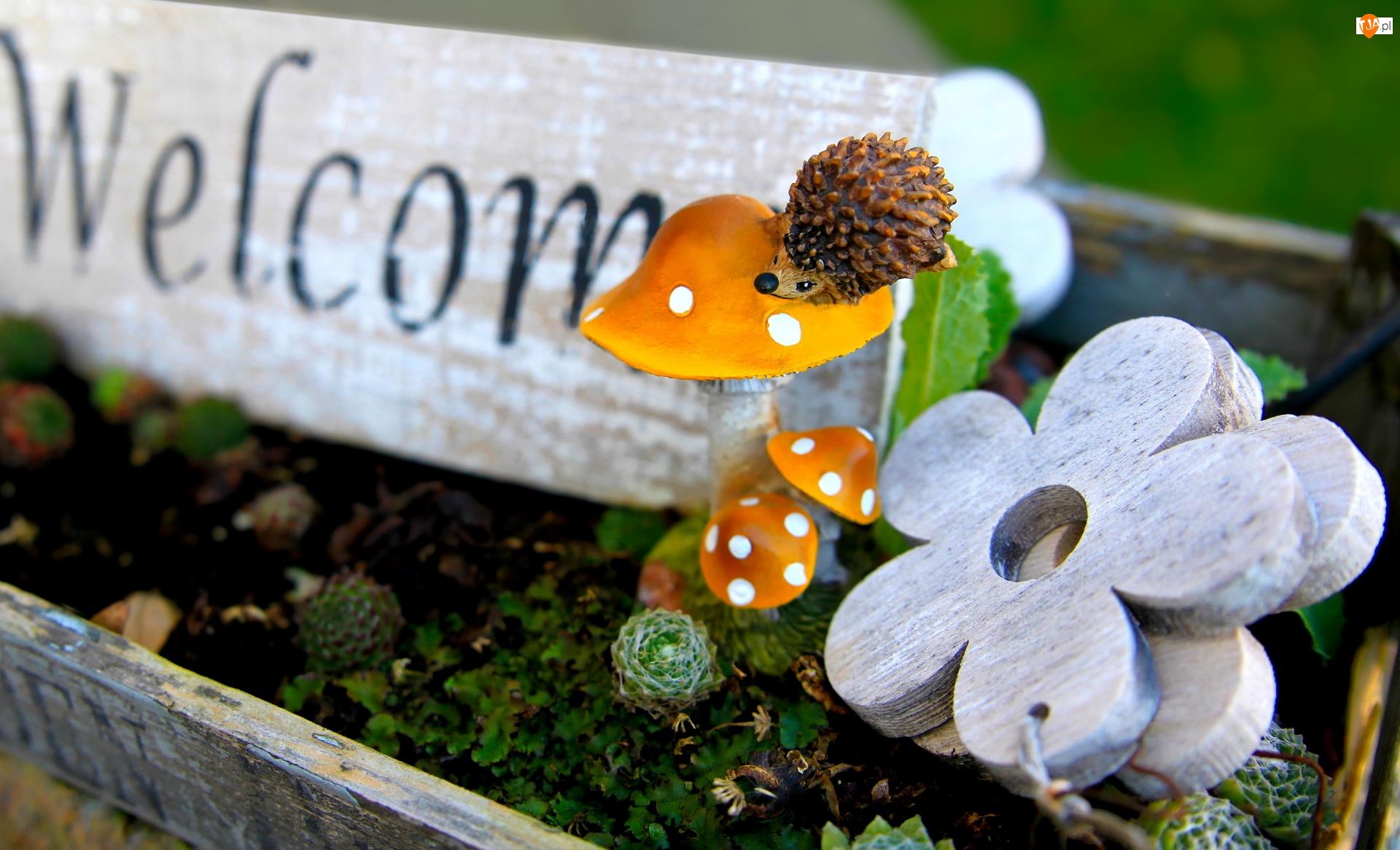 Welcome, Skrzynka, Napis, Jeż, Tabliczka, Kwiatki, Ozdoby, Drewniana, Grzyby