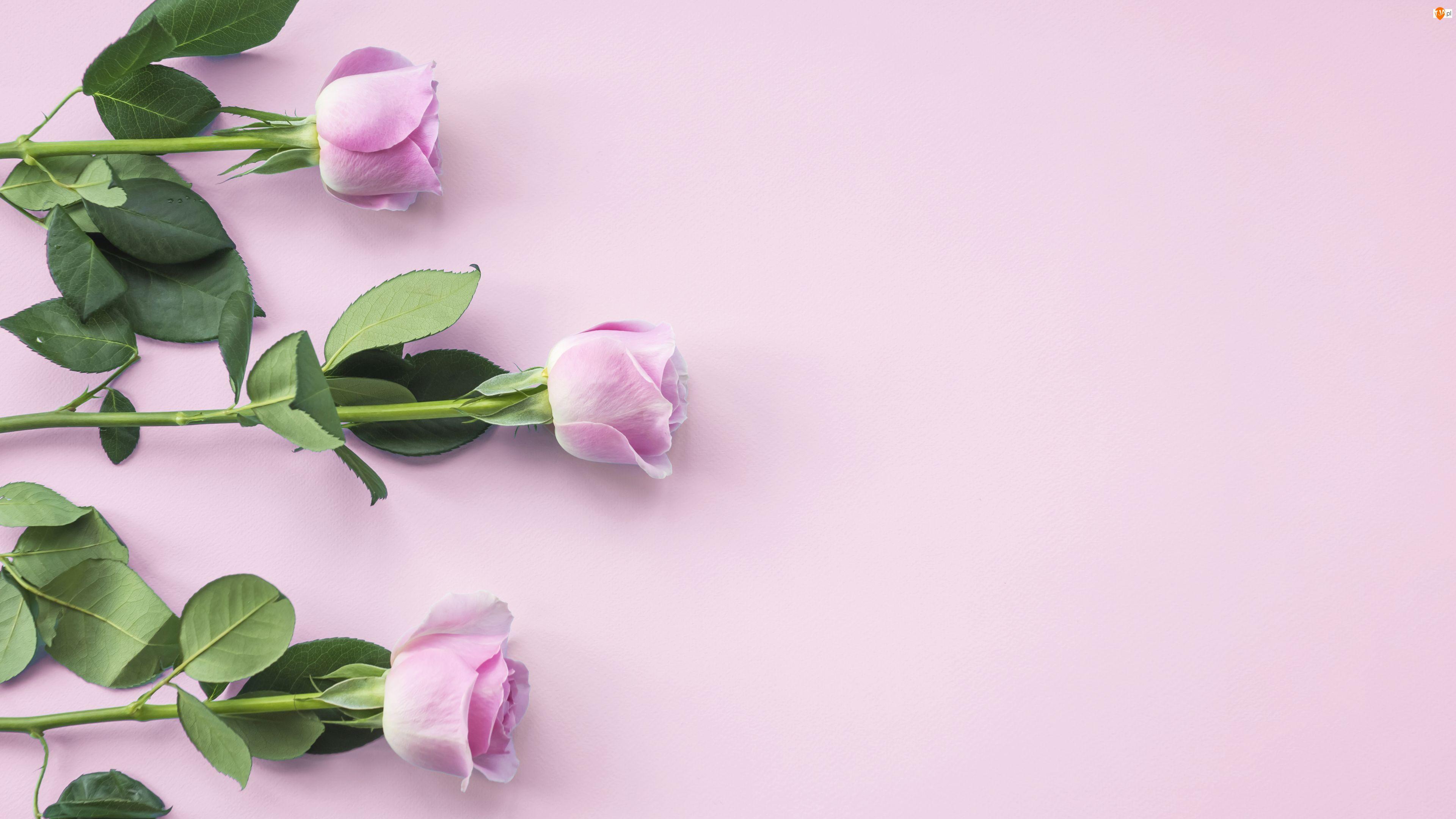 Róże, Tło, Trzy, Kwiaty, Różowe