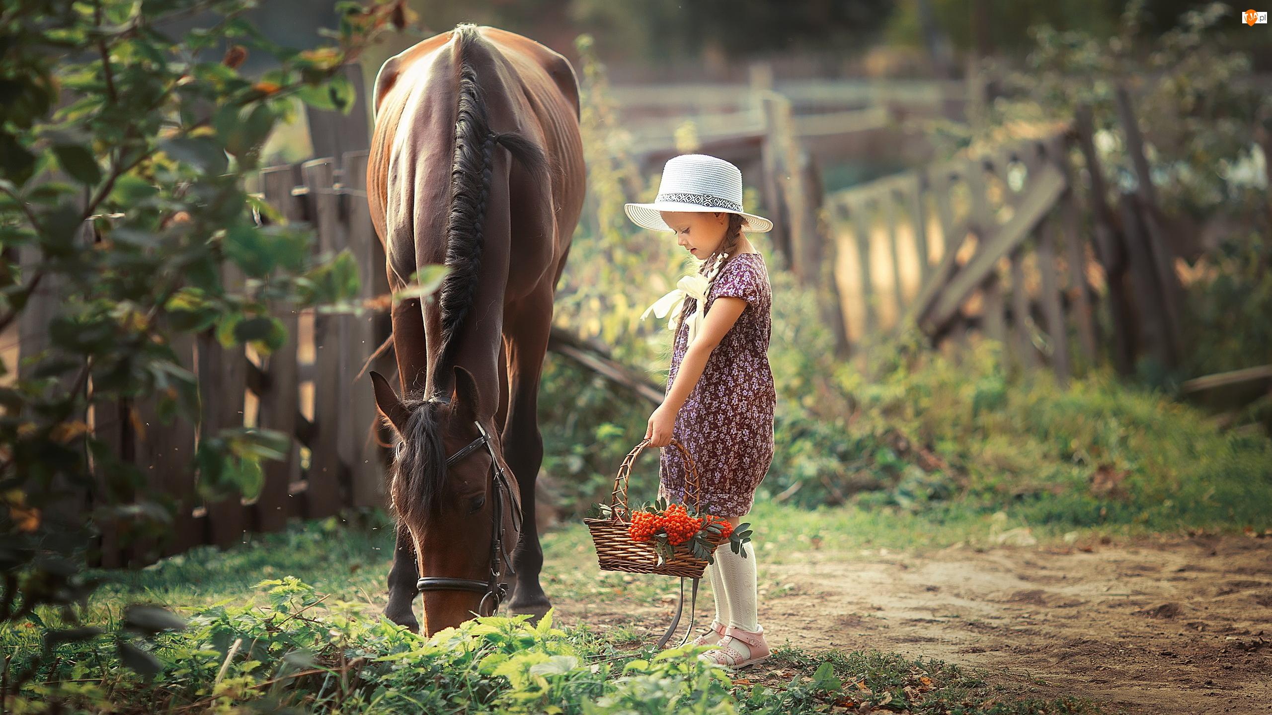 Koszyk, Koń, Dziewczynka, Kapelusz