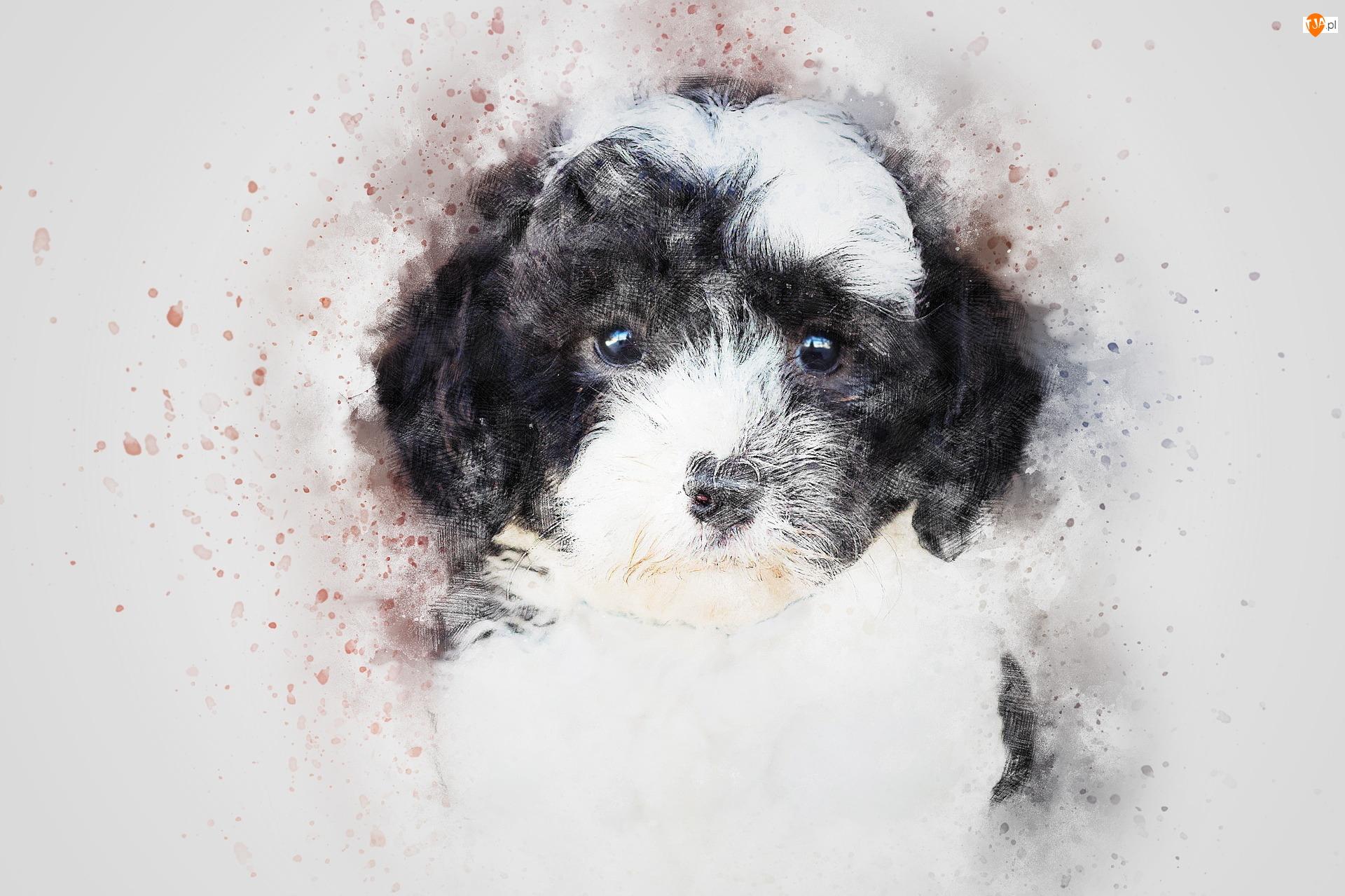 Czarno-biały, Grafika, Szczeniak, Pies, Mordka