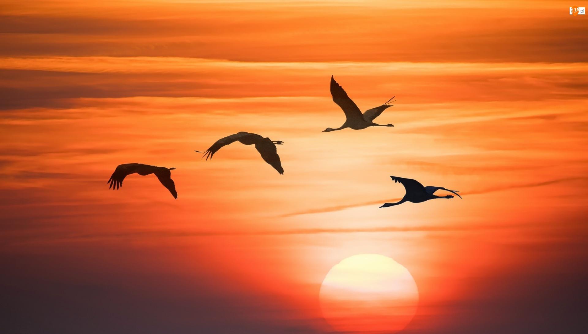 Ptaki, Grafika, Zachód słońca