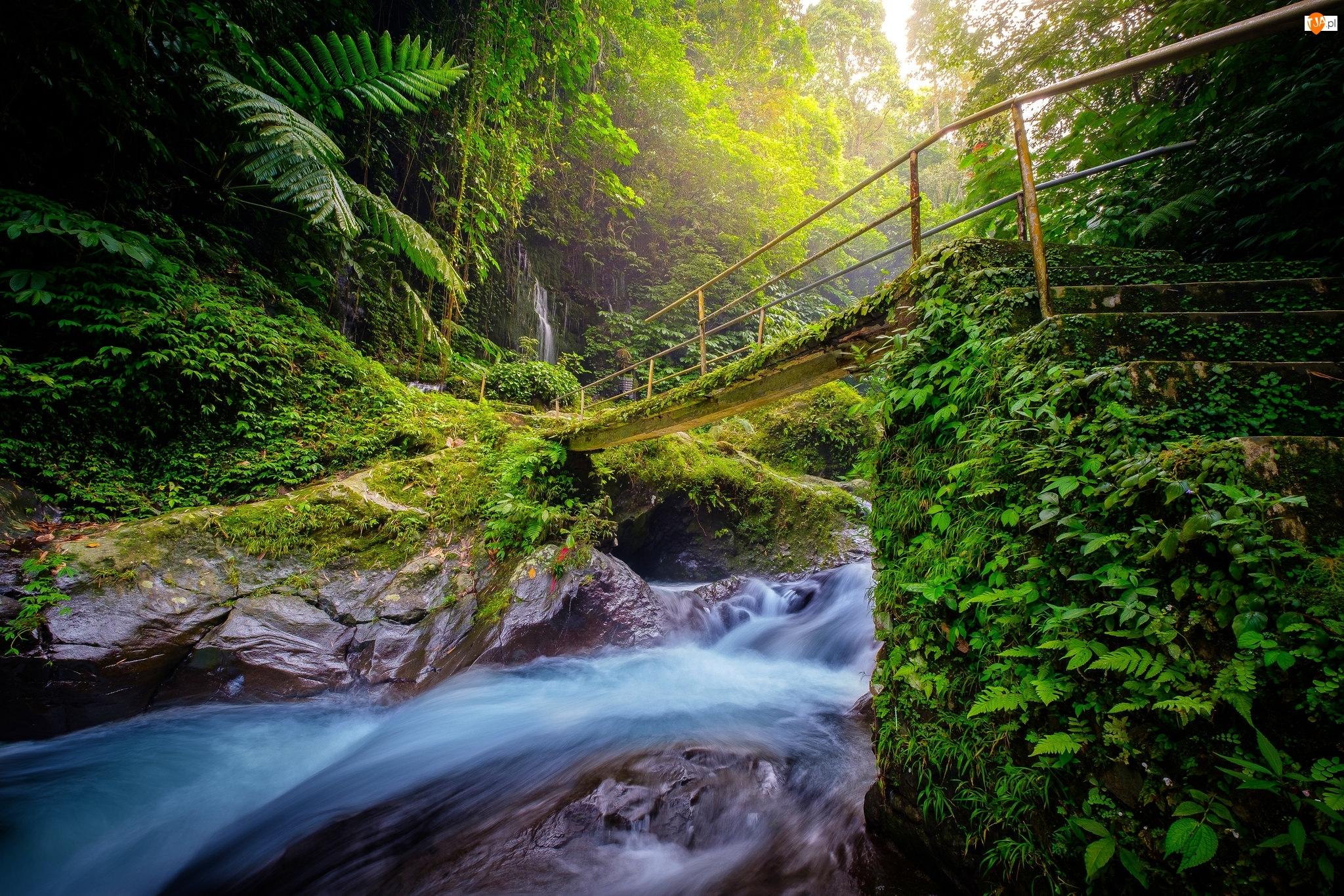 Rzeka, Skały, Drzewa, Las, Most