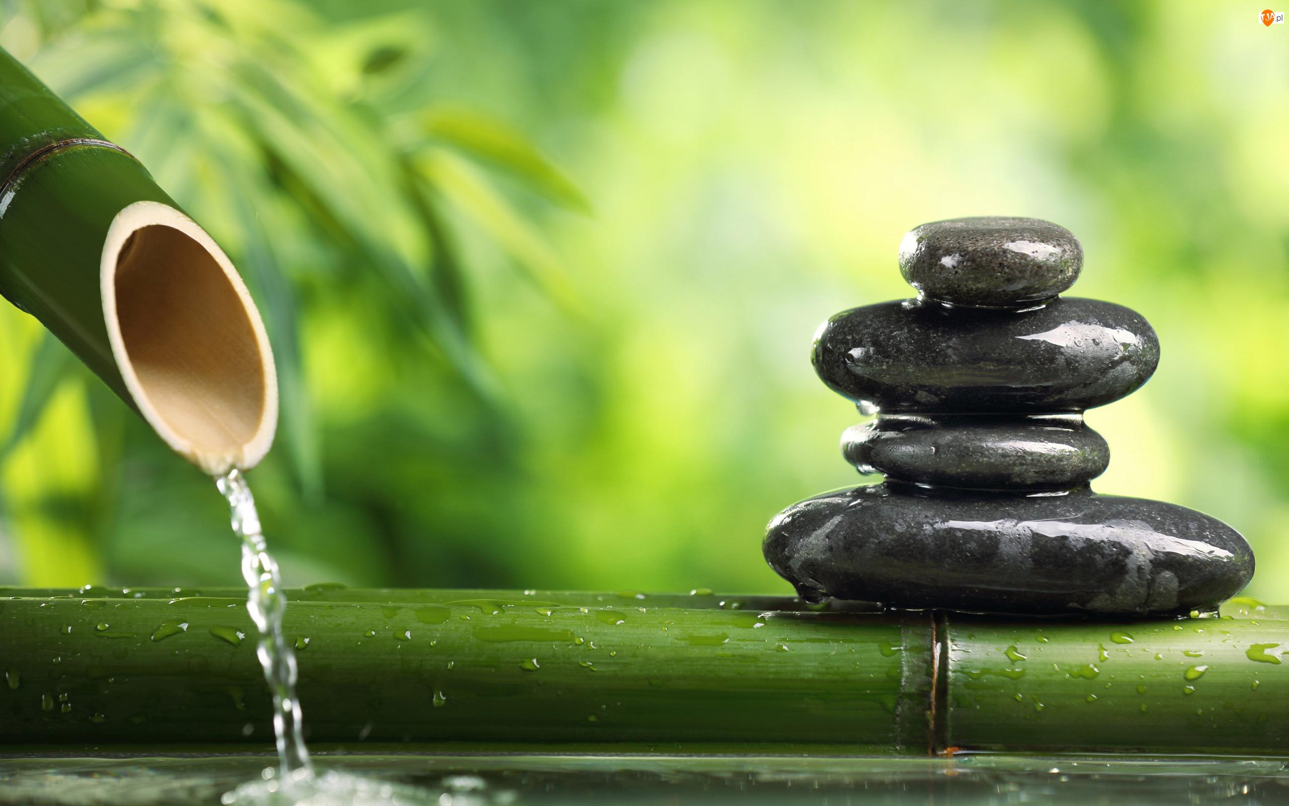 Woda, Bambus, Liście, Kamienie