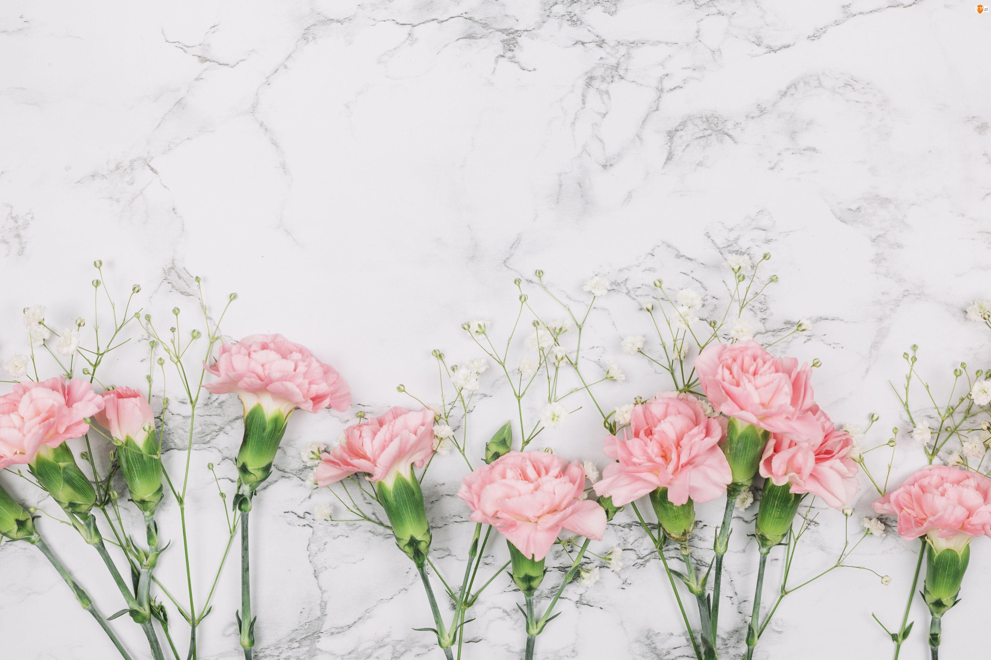 Goździki, Marmurkowe, Różowe, Kwity, Tło