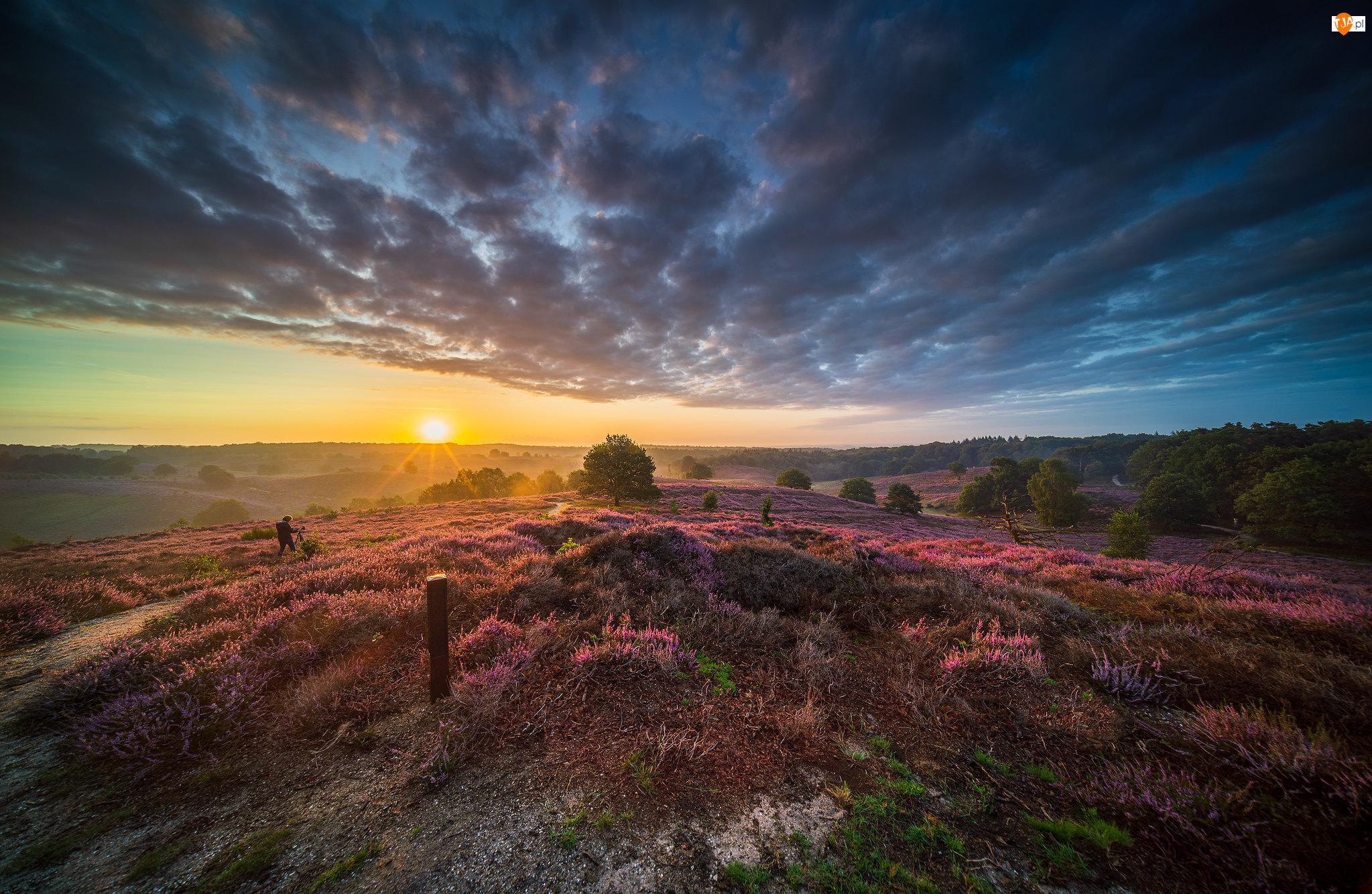 Park Narodowy Veluwezoom, Wrzosowisko, Chmury, Prowincja Geldria, Wrzosy, Wschód słońca, Holandia, Drzewa