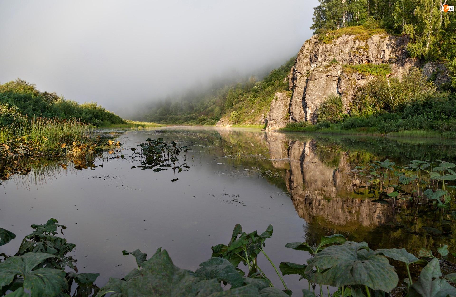 Drzewa, Mgła, Skały, Rzeka, Poranek