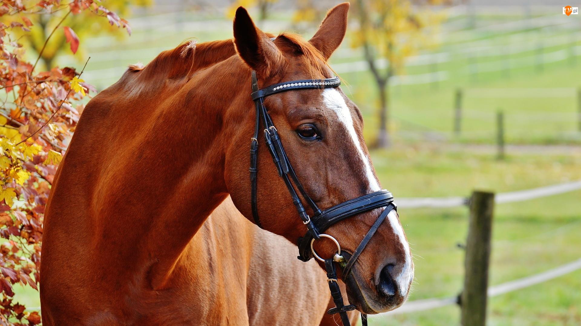 Ogłowie, Koń, Uprząż