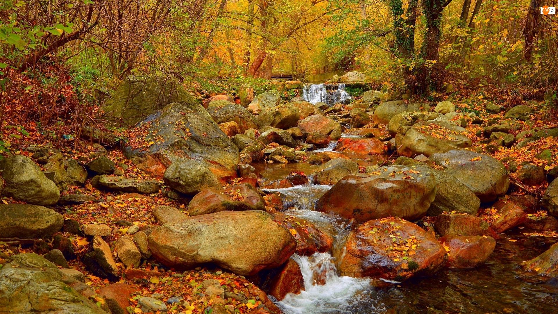 Rzeka, Las, Skały, Liście, Kamienie, Jesień