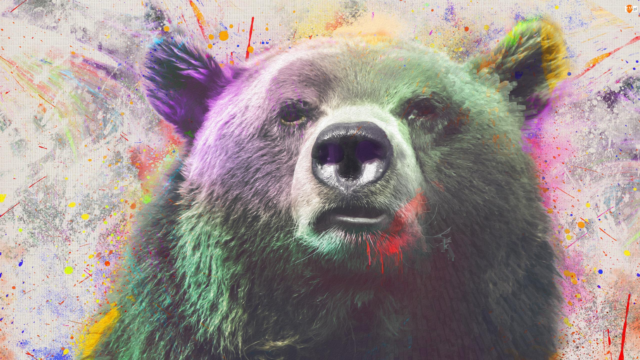 Niedźwiedź brunatny, Grafika