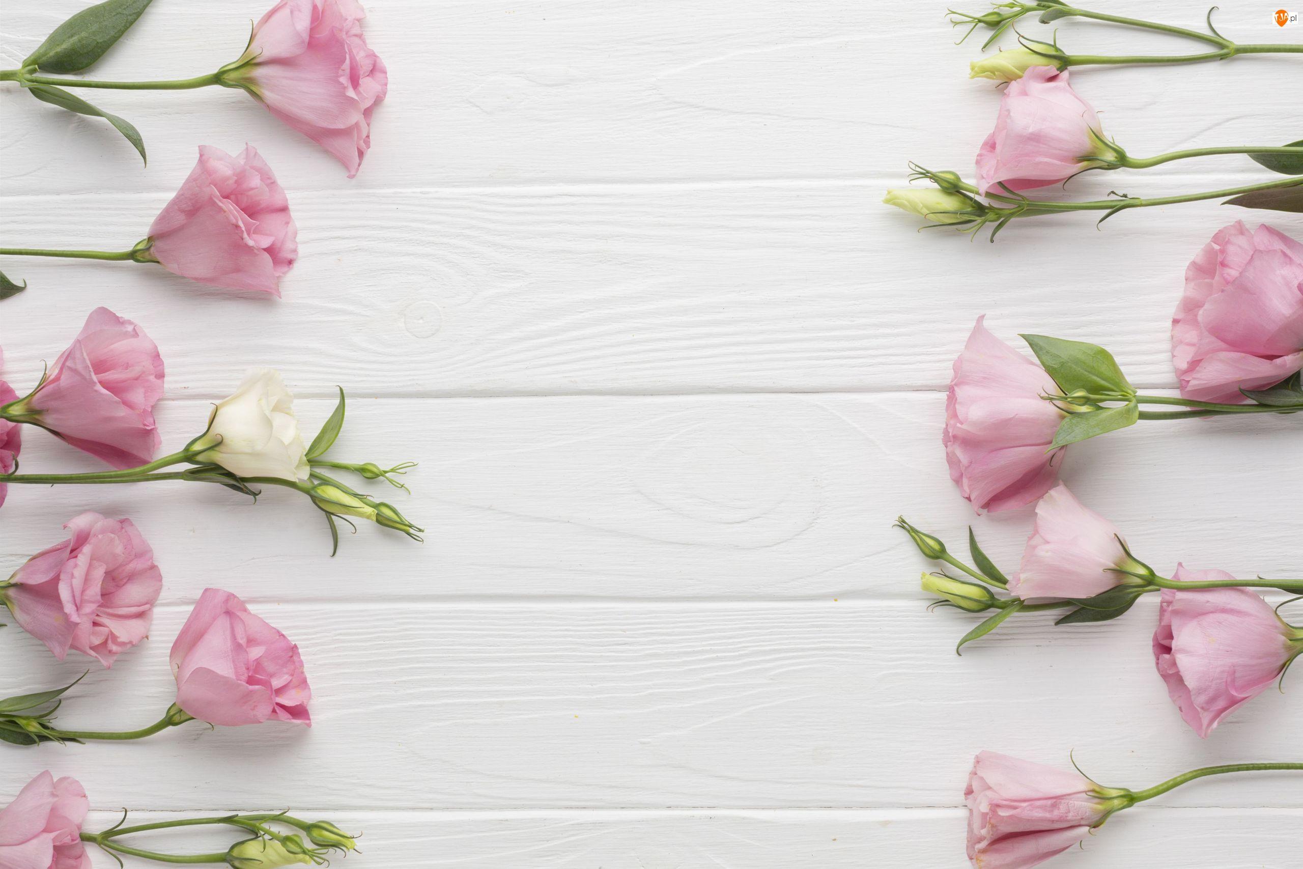 Eustomy, Deski, Różowe, Kwiaty, Białe