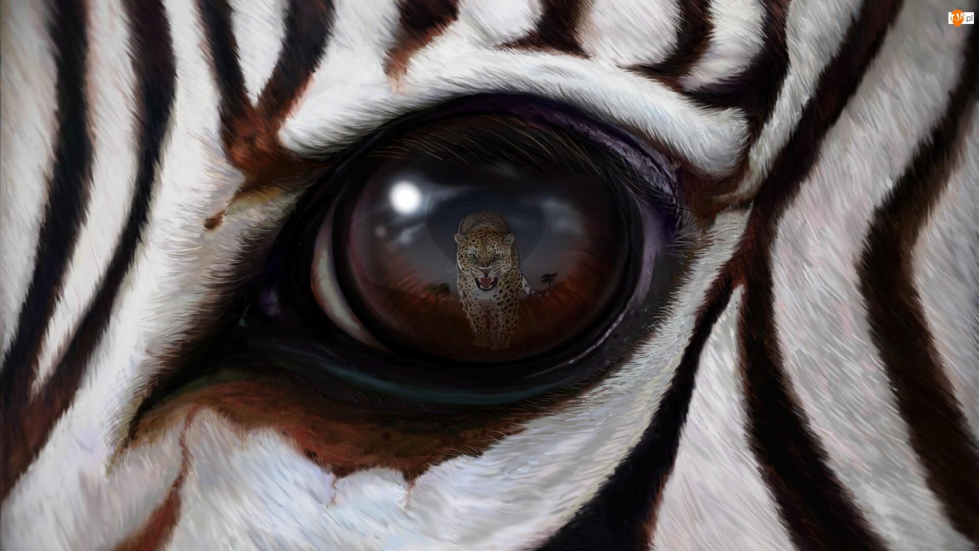 Lampart, Zebra, Oko, Odbicie