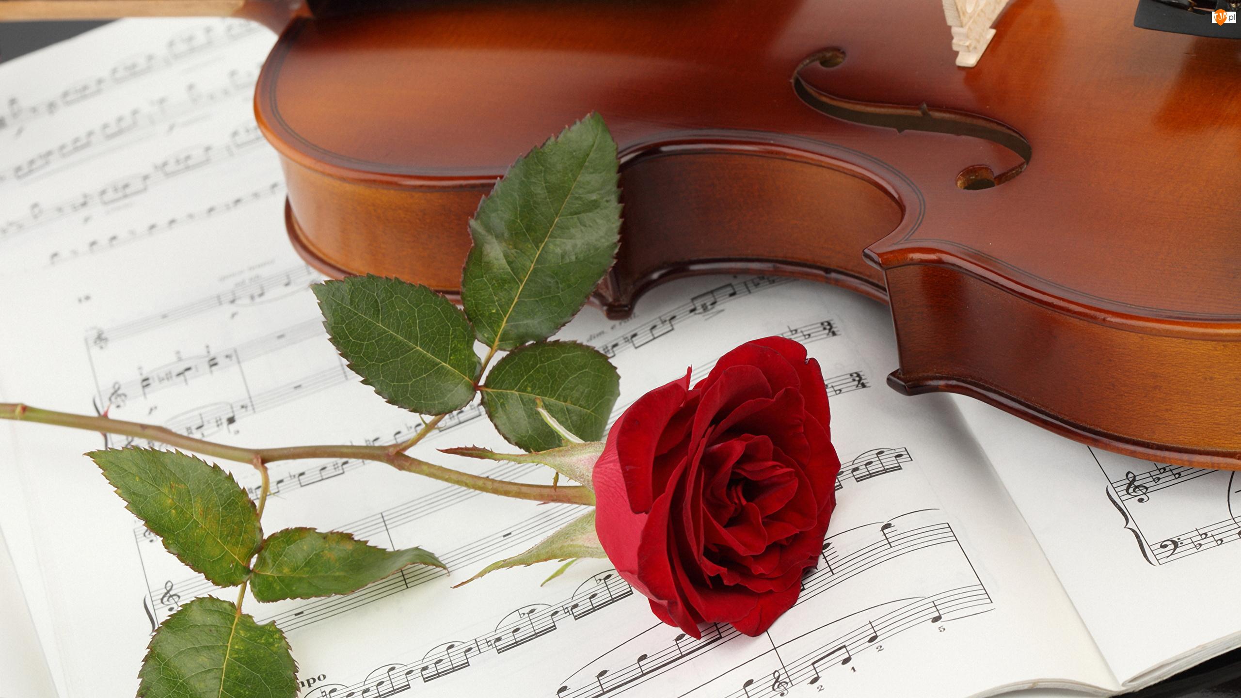 Róża, Skrzypce, Nuty, Kwiat