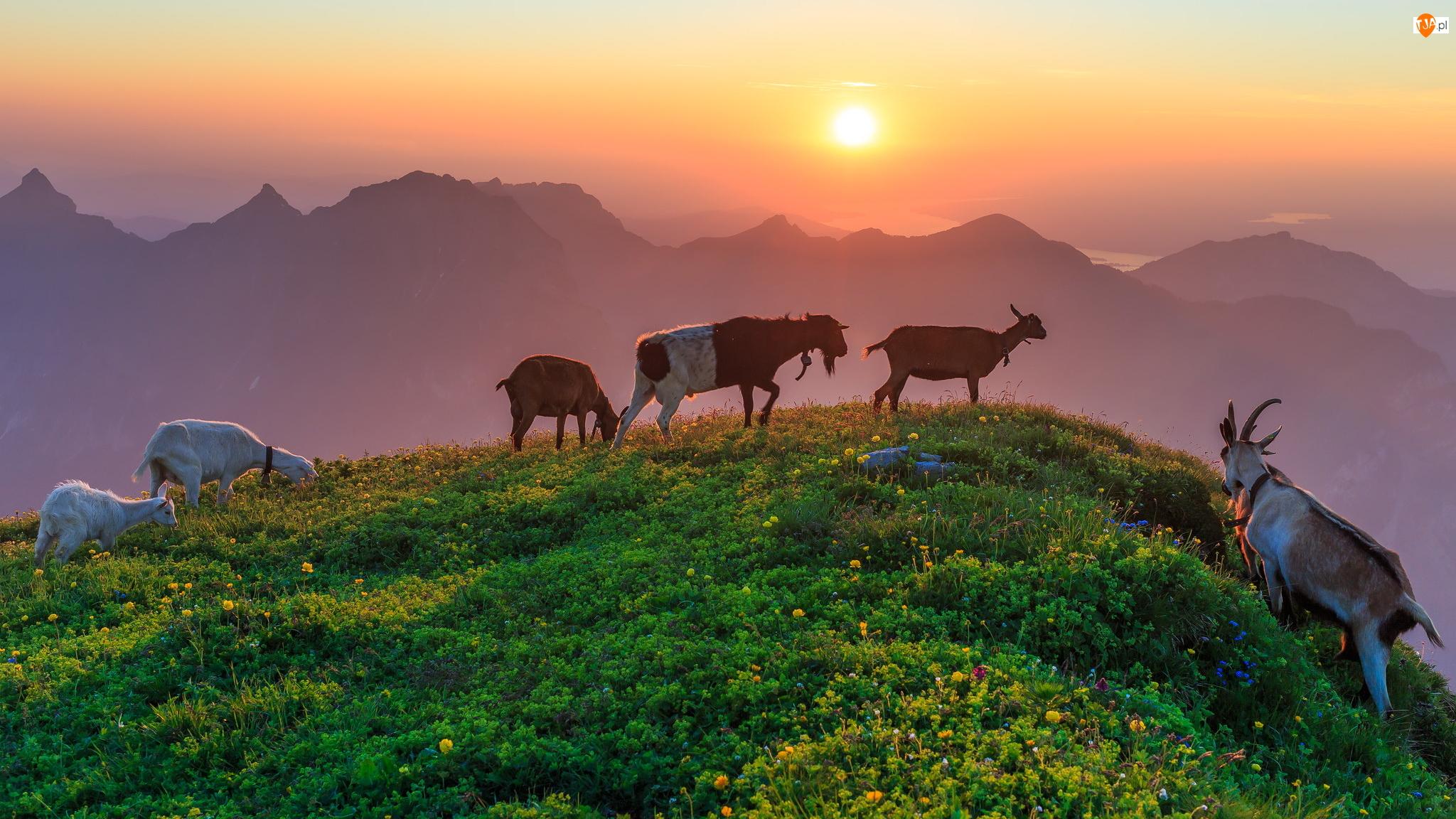 Zachód słońca, Kozy, Wzgórze, Góry