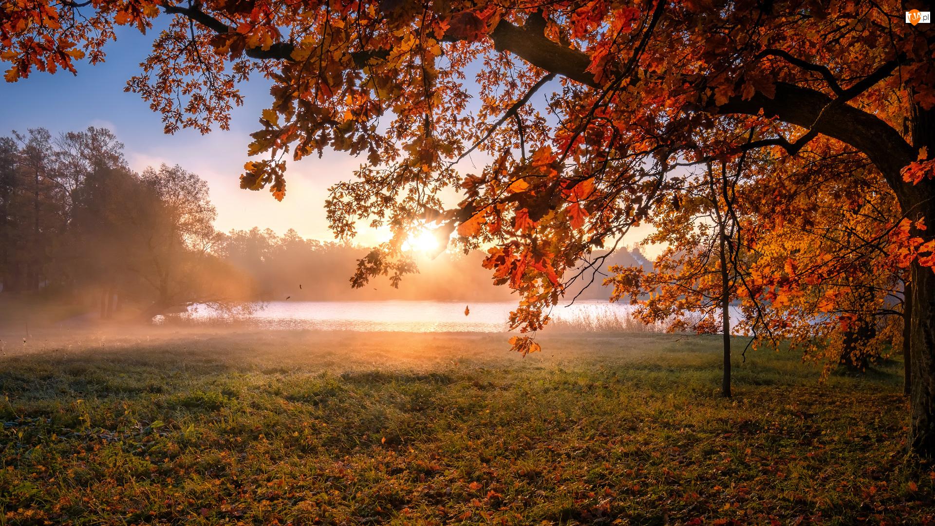 Dąb, Liście, Carskie Sioło, Staw, Jesień, Petersburg, Kolorowe, Wschód słońca, Mgła, Drzewo, Rosja