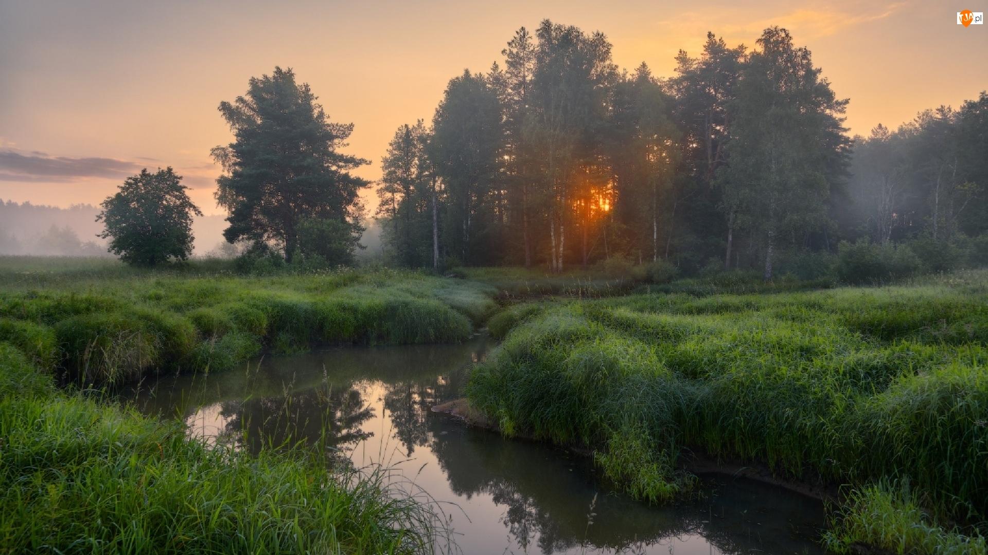 Gęsta, Rzeka, Drzewa, Świt, Trawa, Mgła
