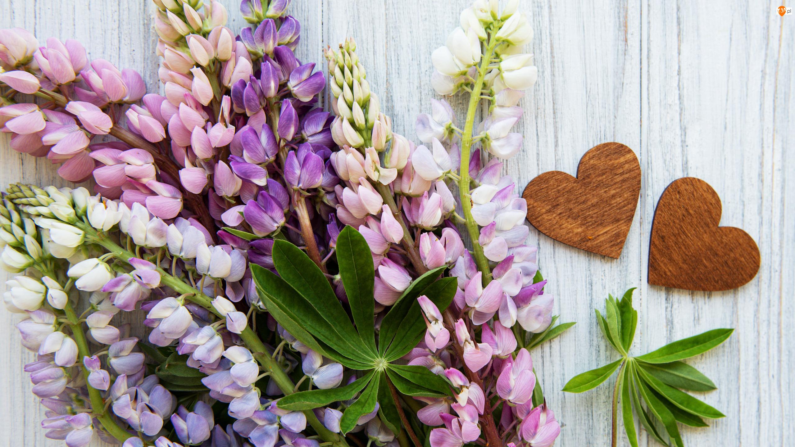 Deski, Kwiaty, Łubin, Serca