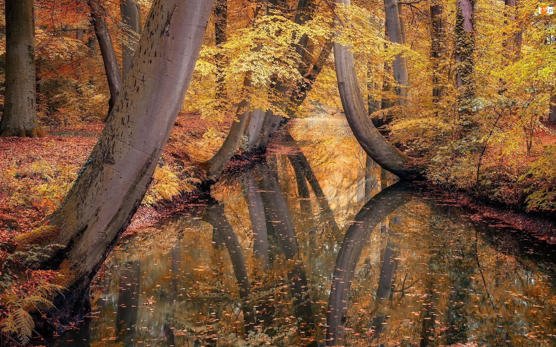 Las, Jesień, Opadłe, Rzeka, Drzewa, Liście