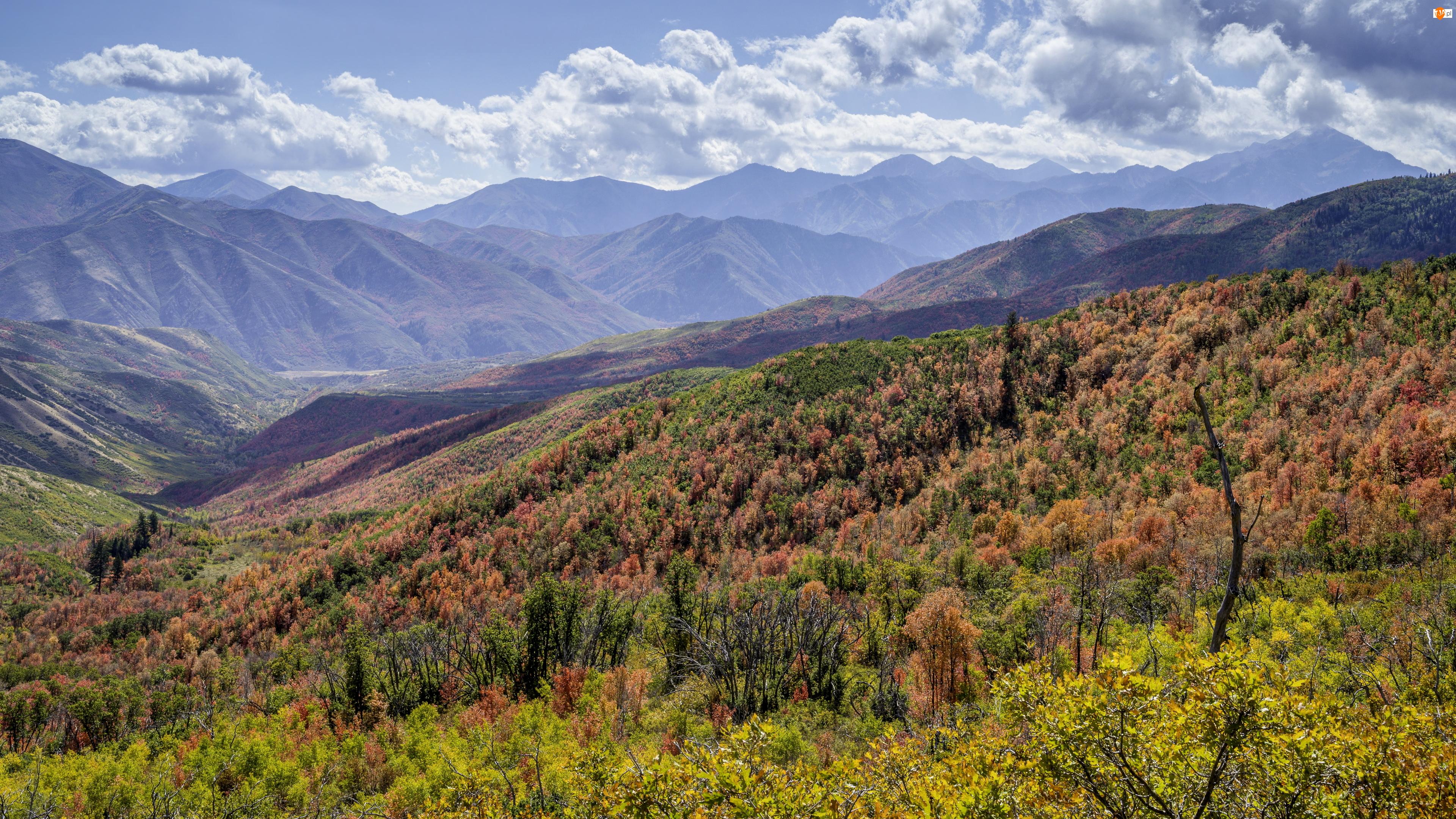 Stany Zjednoczone, Krzewy, Wzgórza, Rośliny, Góry Wasatch, Jesień, Chmury, Niebo, Kolorowe, Stan Utah