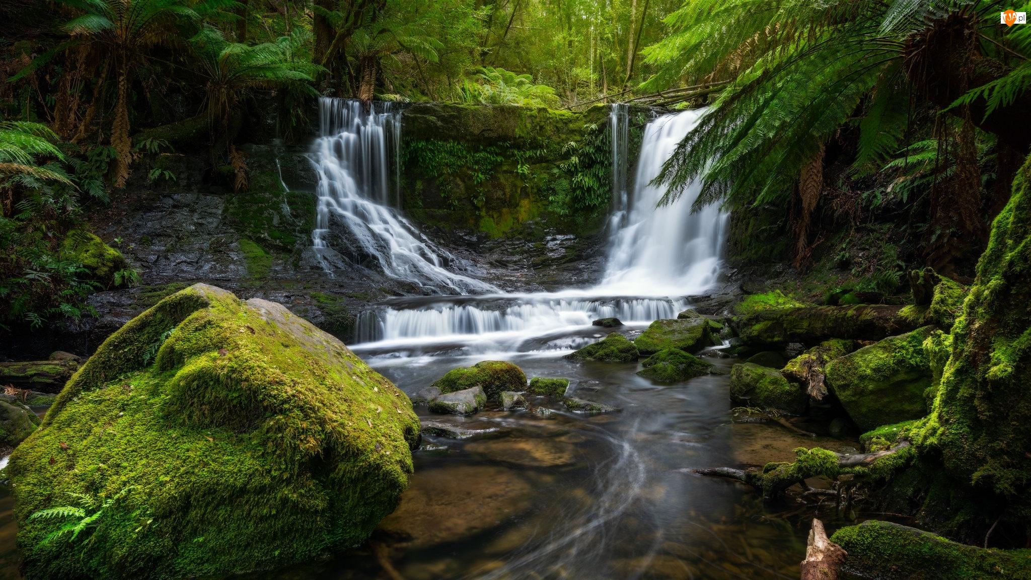 Australia, Rzeka, Park Narodowy Mount Field, Las, Skała, Wodospad Horseshoe Falls, Kamienie, Omszałe, Paprocie, Stan Tasmania
