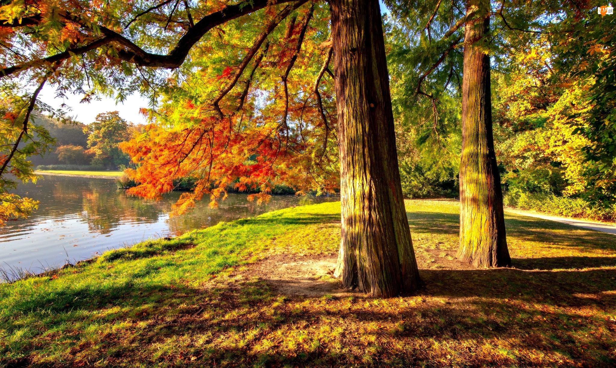 Jesień, Park, Drzewa, Staw