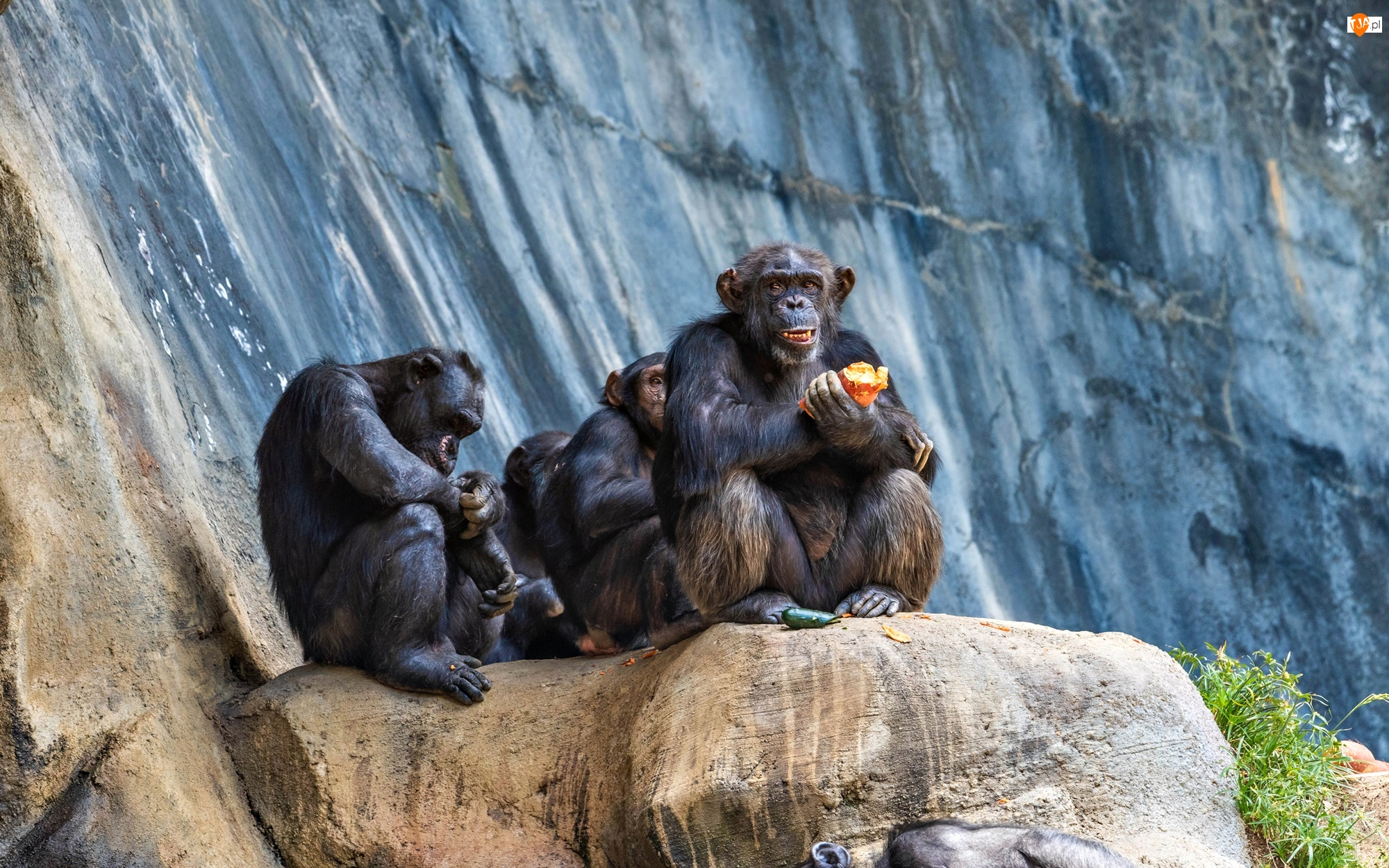 Skały, Małpy, Szympansy
