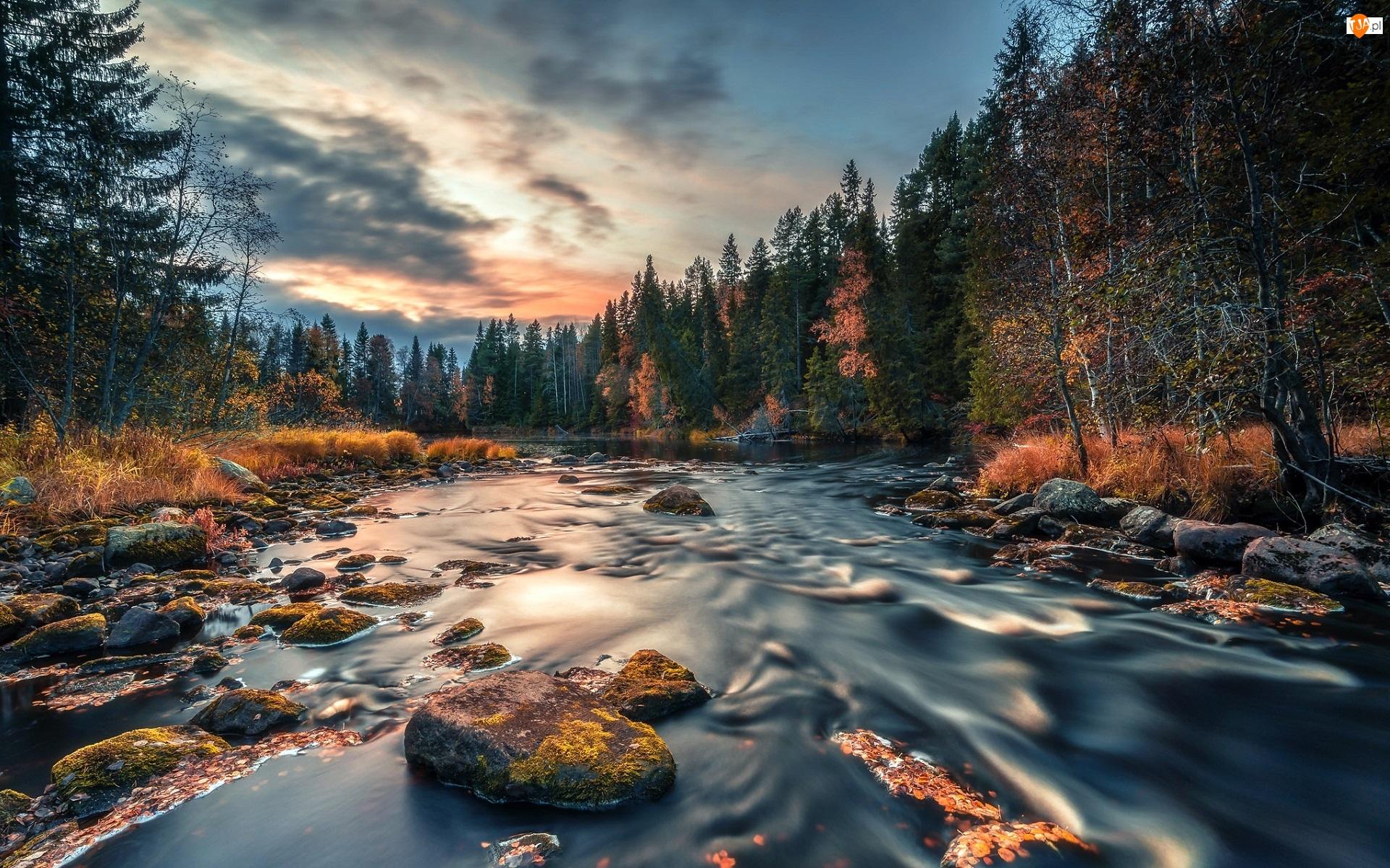 Las, Drzewa, Trawy, Jesień, Pożółkłe, Kamienie, Rzeka