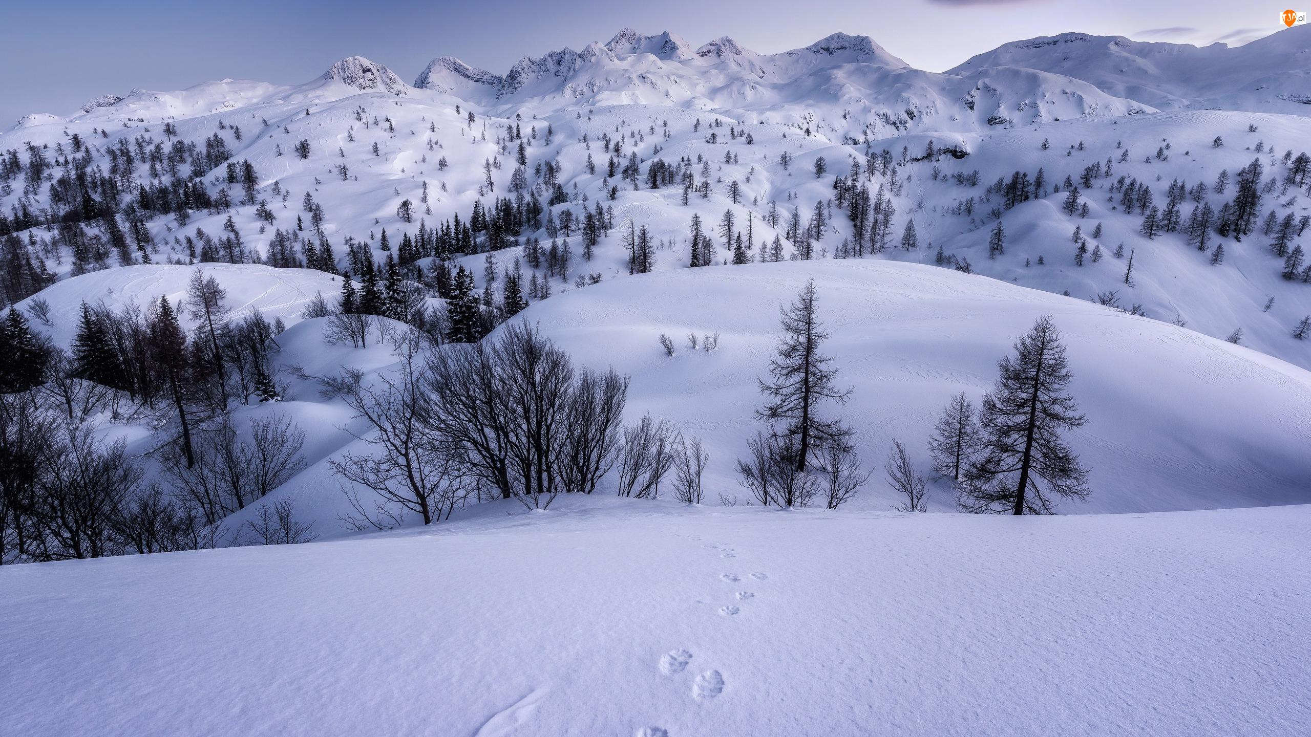 Drzewa, Ślady, Góry, Zima, Śnieg