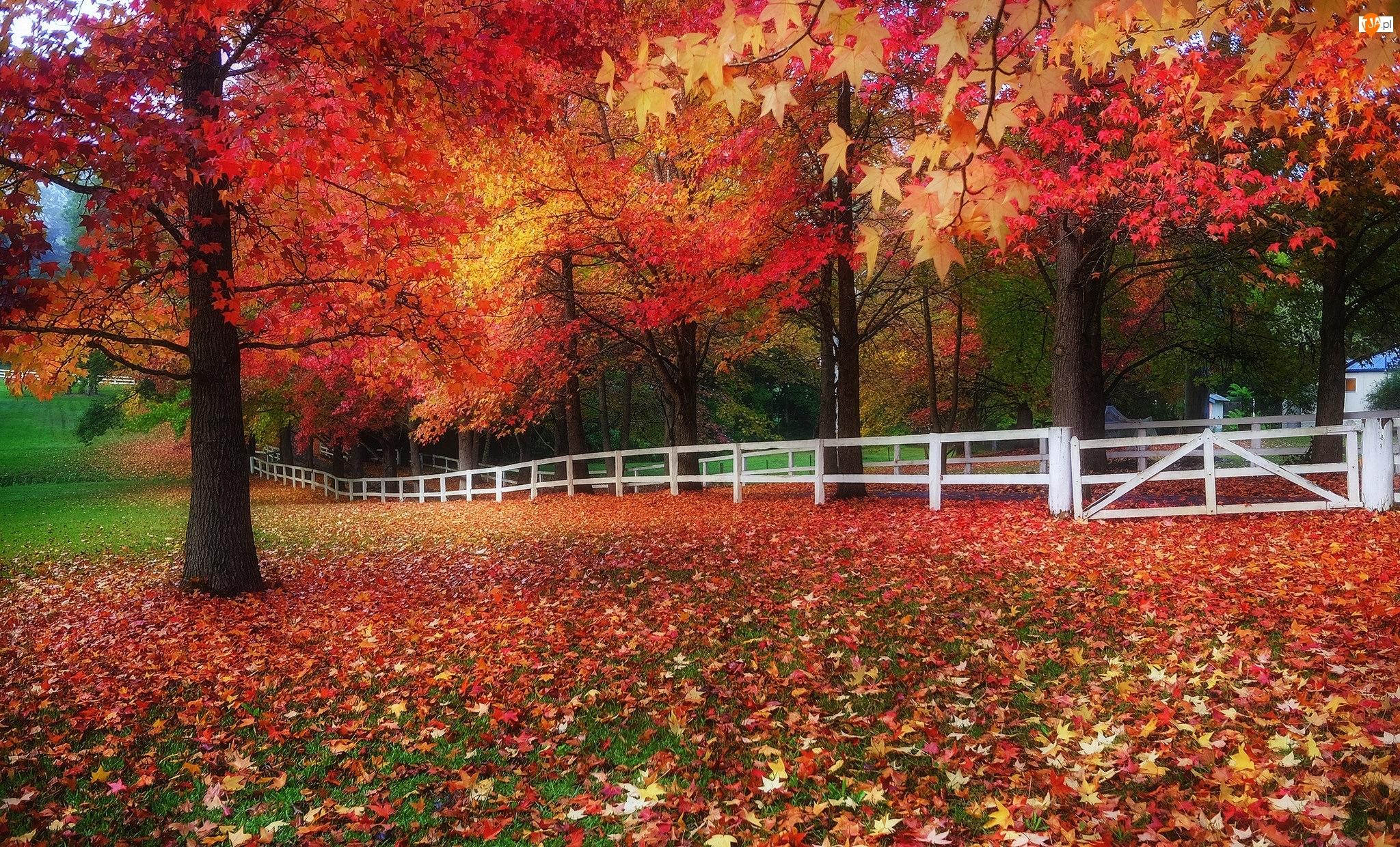 Jesień, Ogrodzenie, Drzewa, Park, Liście
