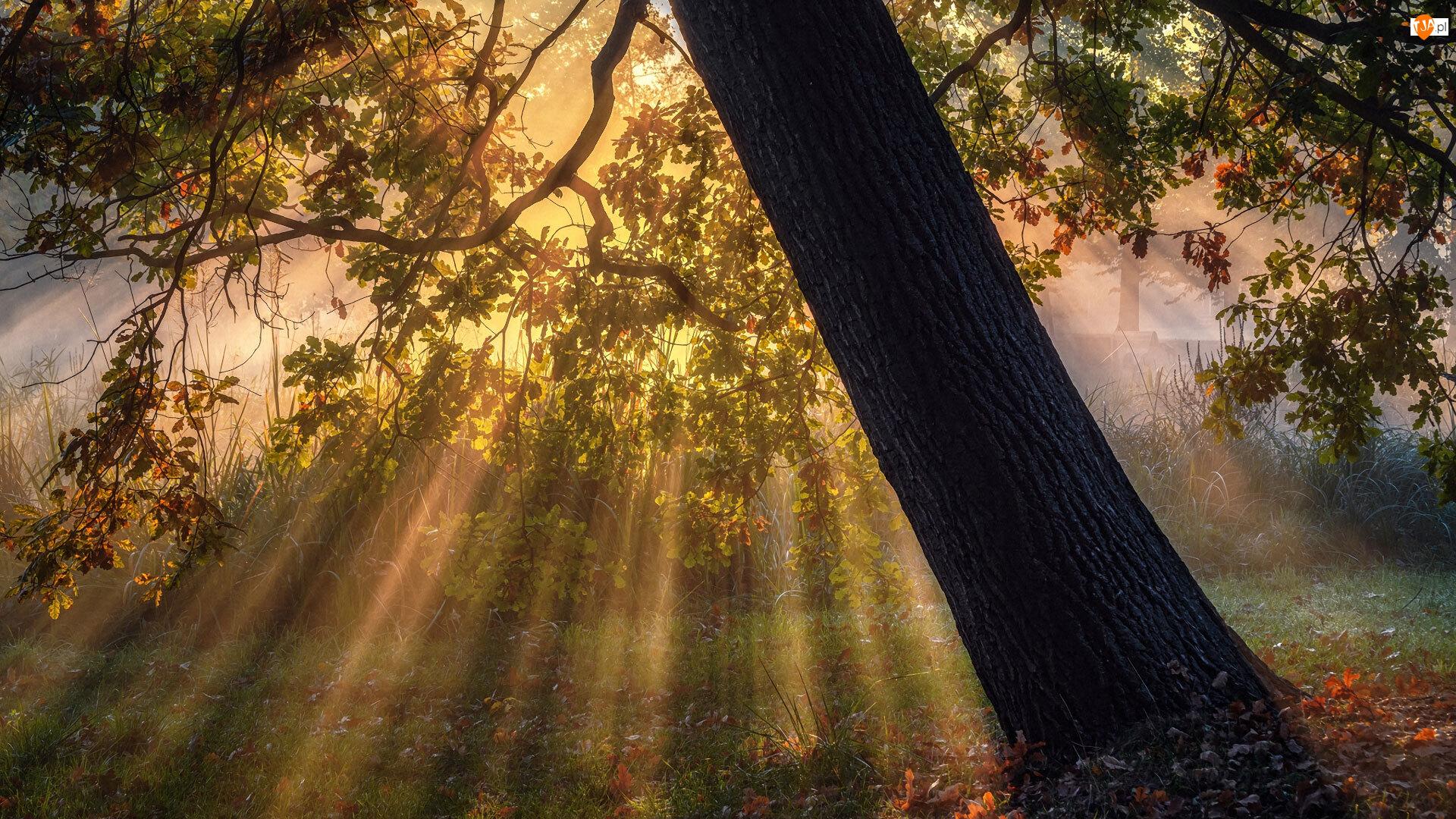 Przebijające światło, Drzewo, Gałęzie