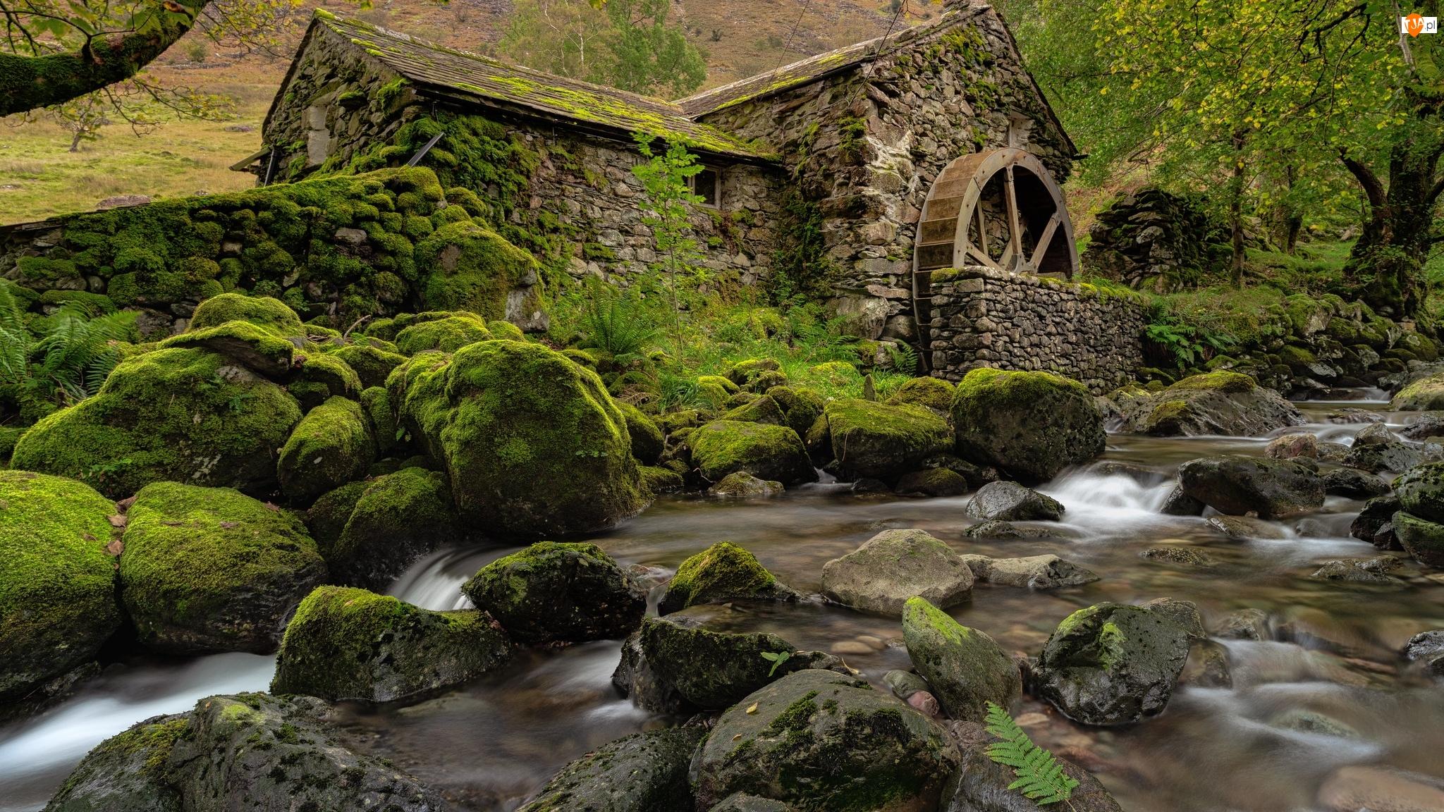 Młyn wodny, Omszałe, Anglia, Rzeka, Cumbria, Borrowdale, Kamienie